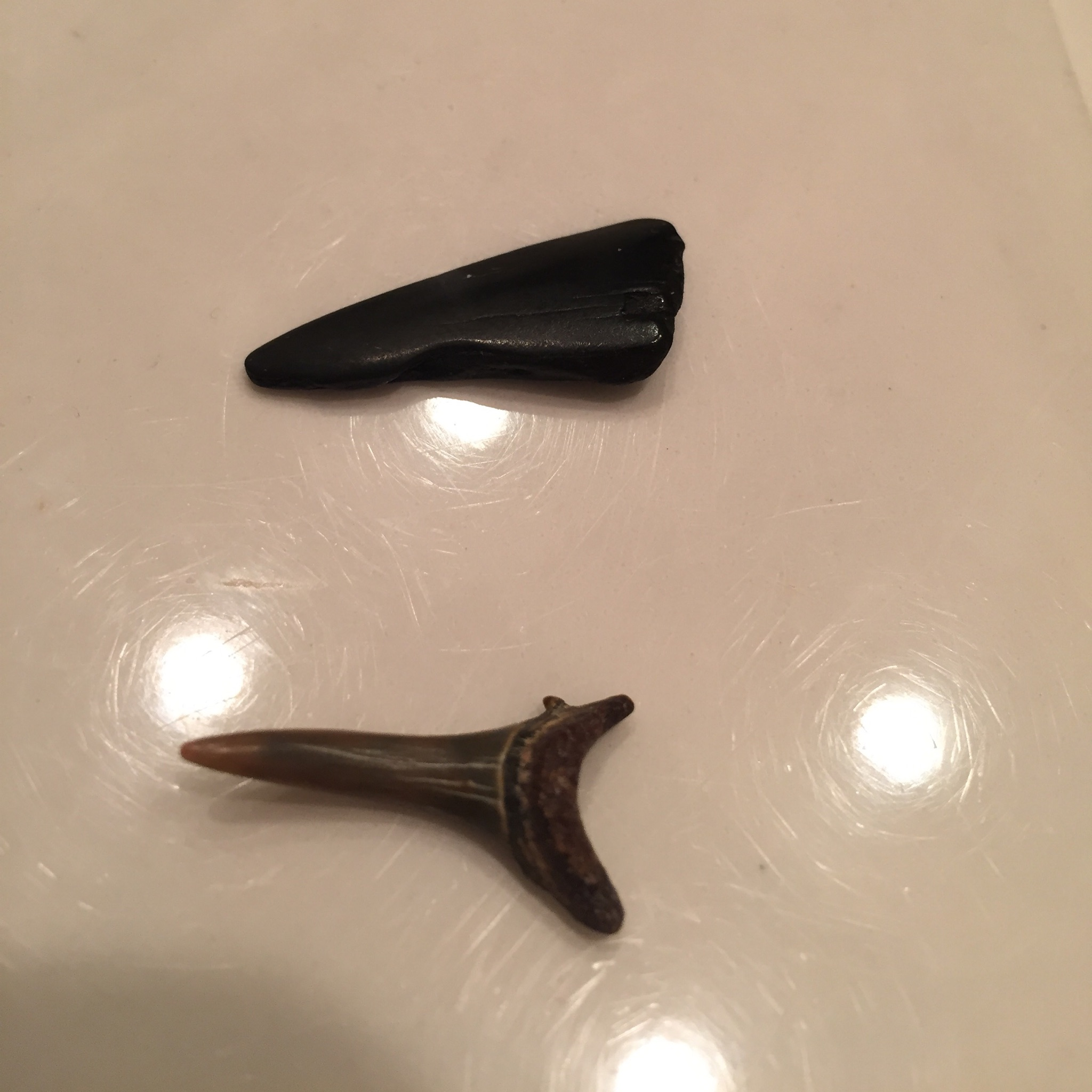 { Hi Shark Week, is that you? These are real shark teeth. If you got the chills, it's cool so did I. }