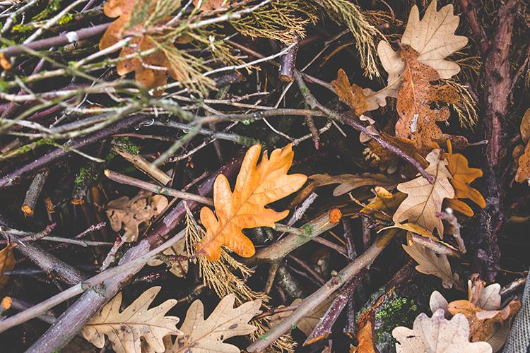 nature-bush-leaf-leaves.jpg