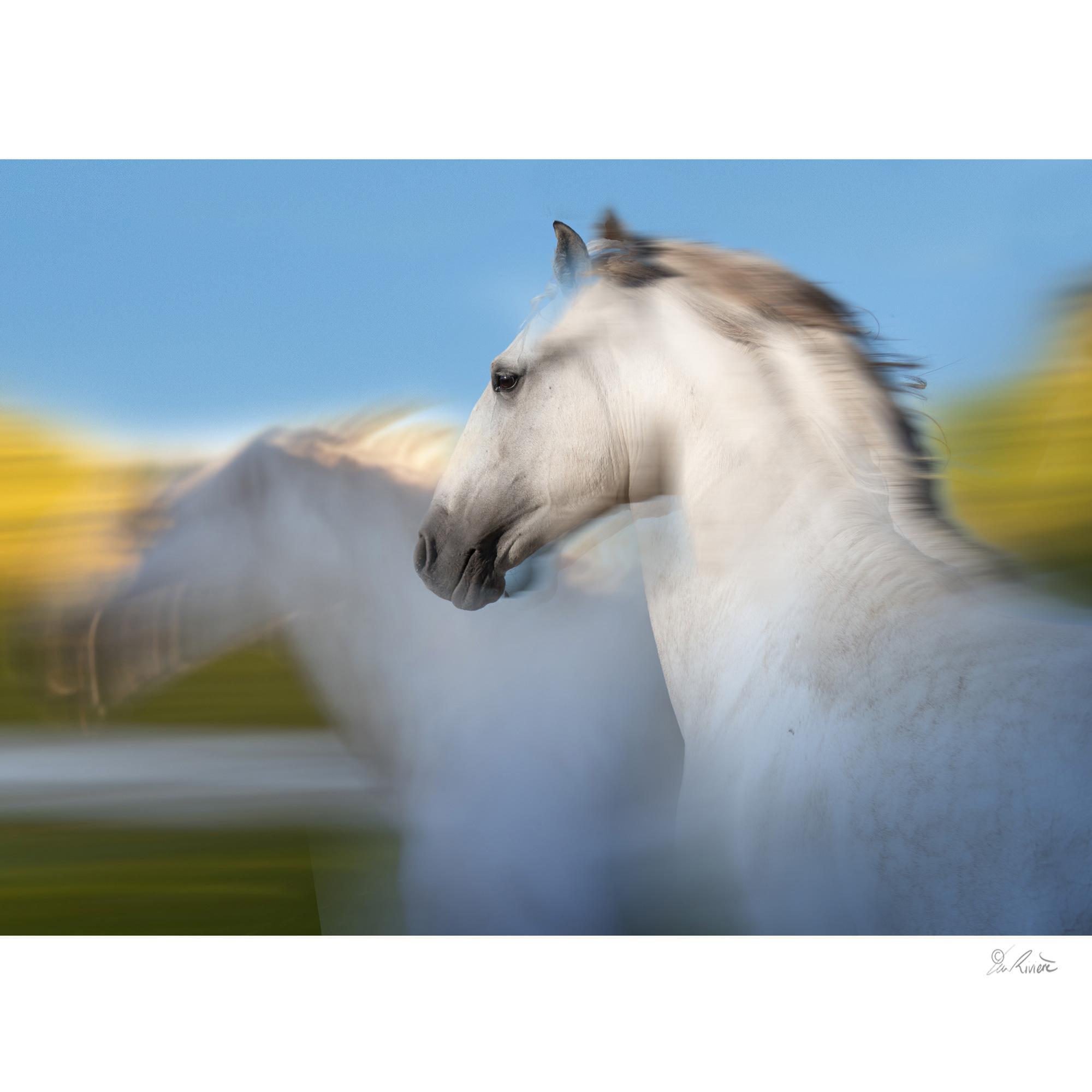 ©LÉA RIVIÈRE_ART_passion_horse1.jpg