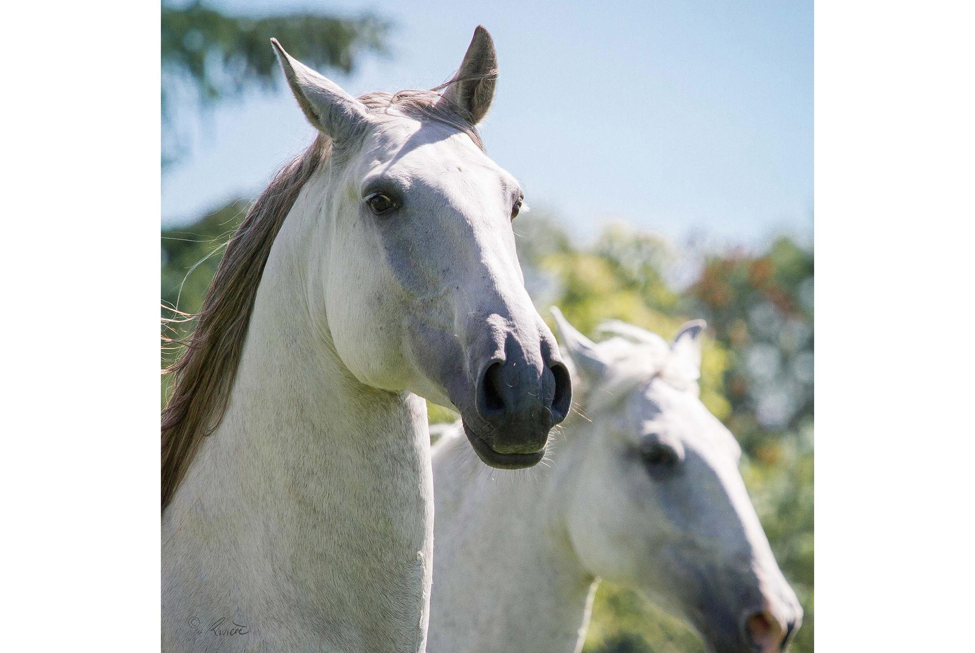 ©LÉA RIVIÈRE_ART_passion_horse14.jpg