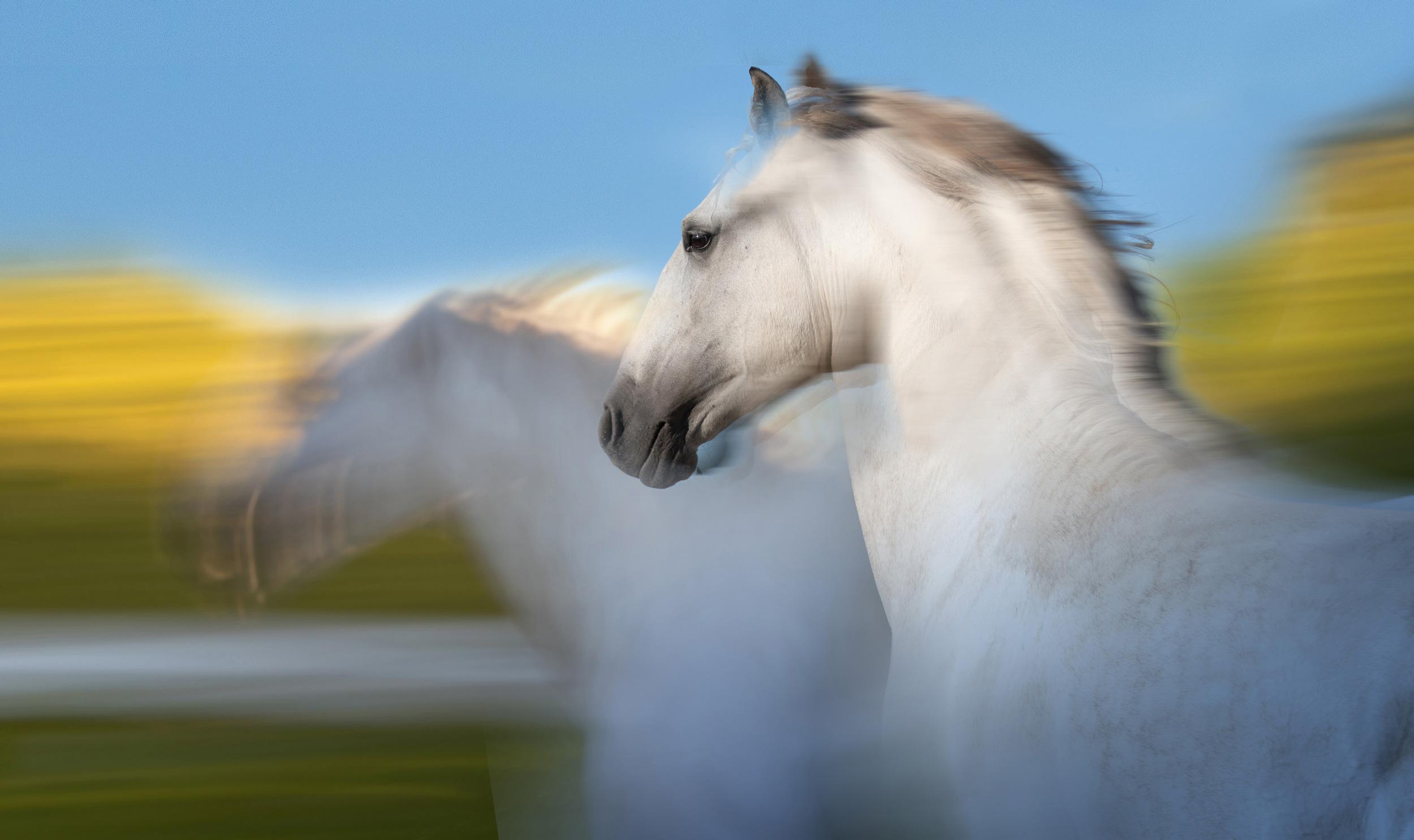 ©LÉA RIVIÈRE_ART_passion_horse38.jpg