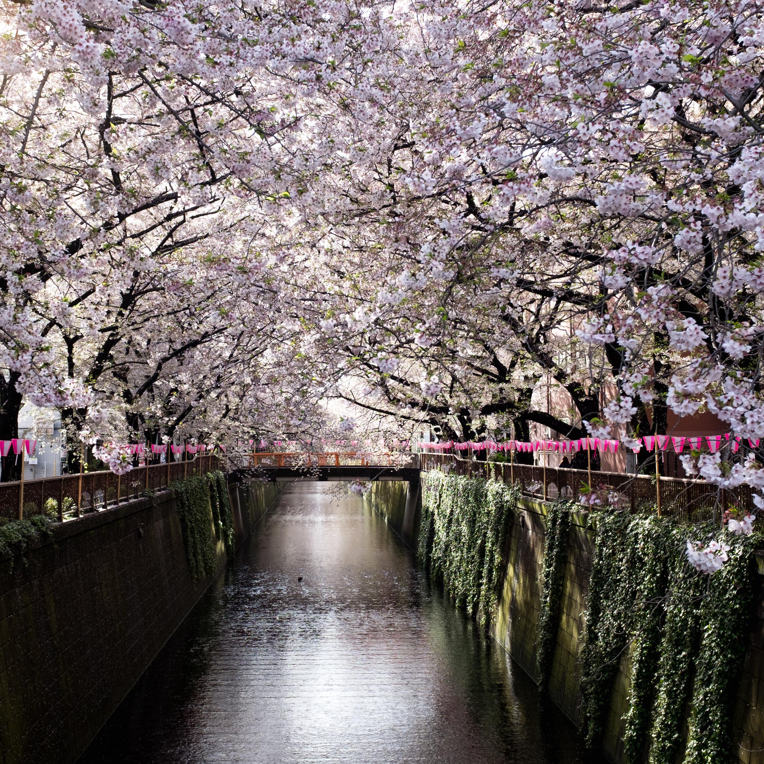 canal running through Naka Meguro