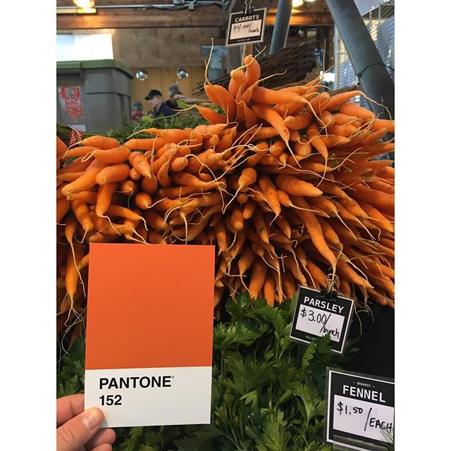 Carrots for days @ the #FarmersMarket 🥕 . . . #OlyPantones #Pantone #Colors  #PantoneColors #PantoneGram #ColorInspiration #Olympia #Orange #Carrots #Produce #OrganicFood #Downtown #Bright #Design #IHaveThisThingWithColor #GraphicDesigner #ThurstonTalk