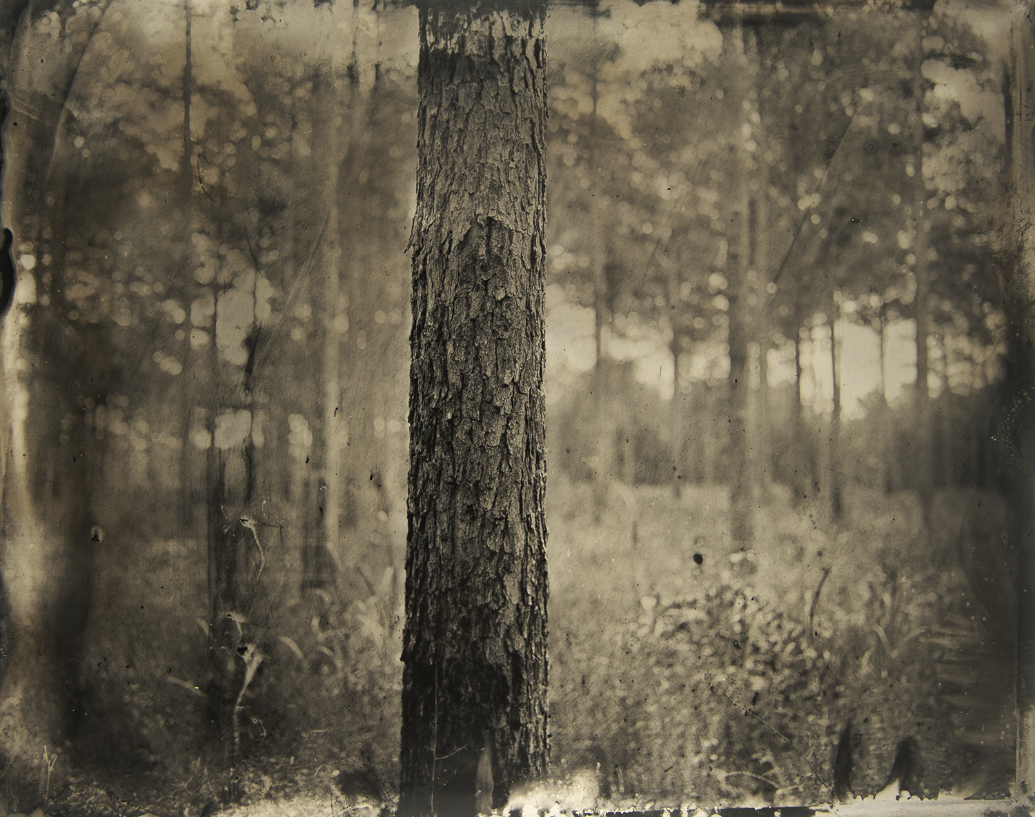 Place of Sense(s), Pike County, GA, 2019, tintype.
