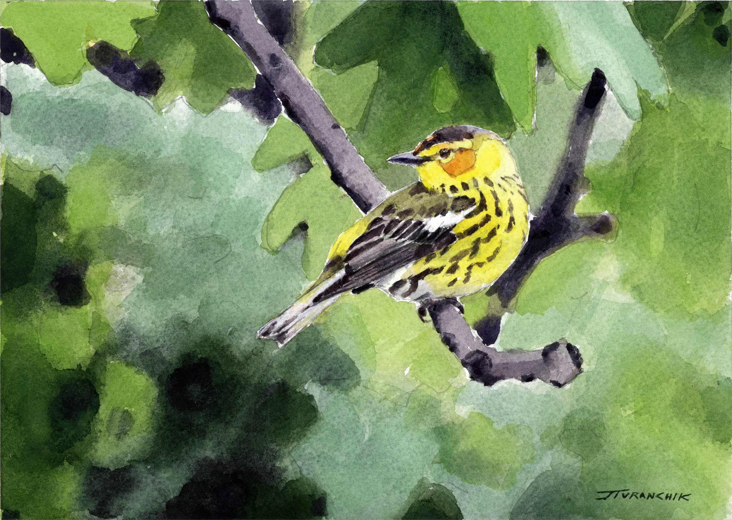 Passing Through - Cape May Warbler