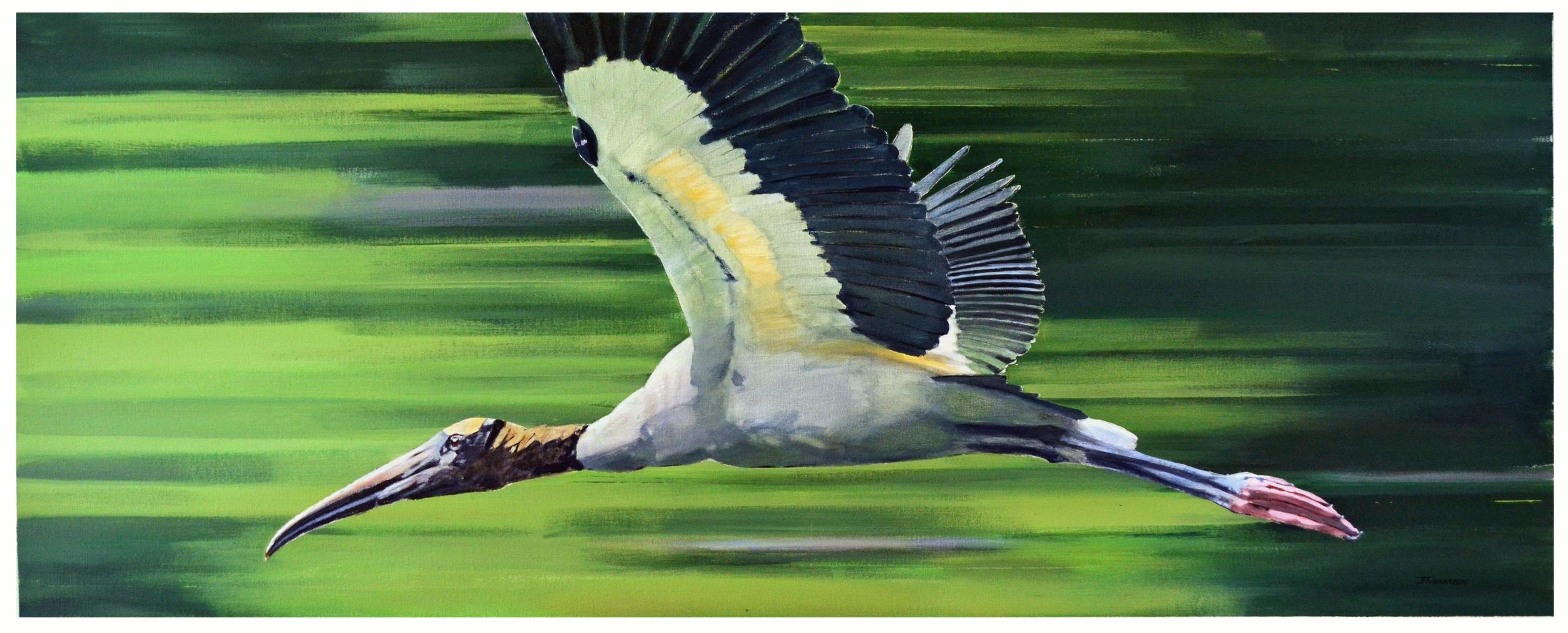 Bird in Flight - Wood Stork