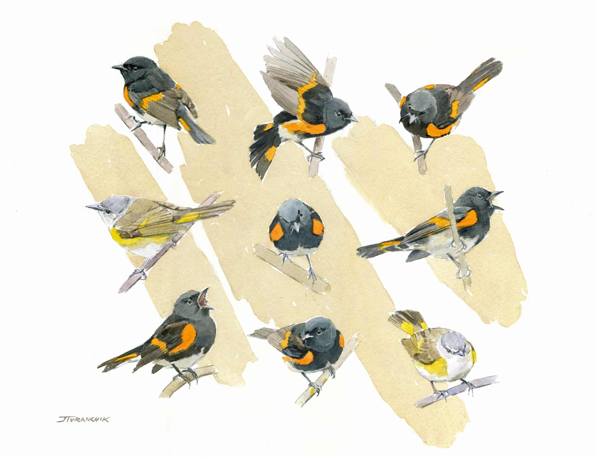 The Compleat Redstart