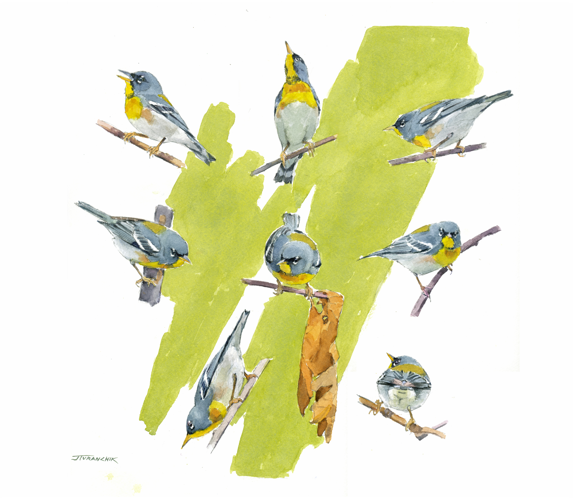 The Compleat Parula Warbler