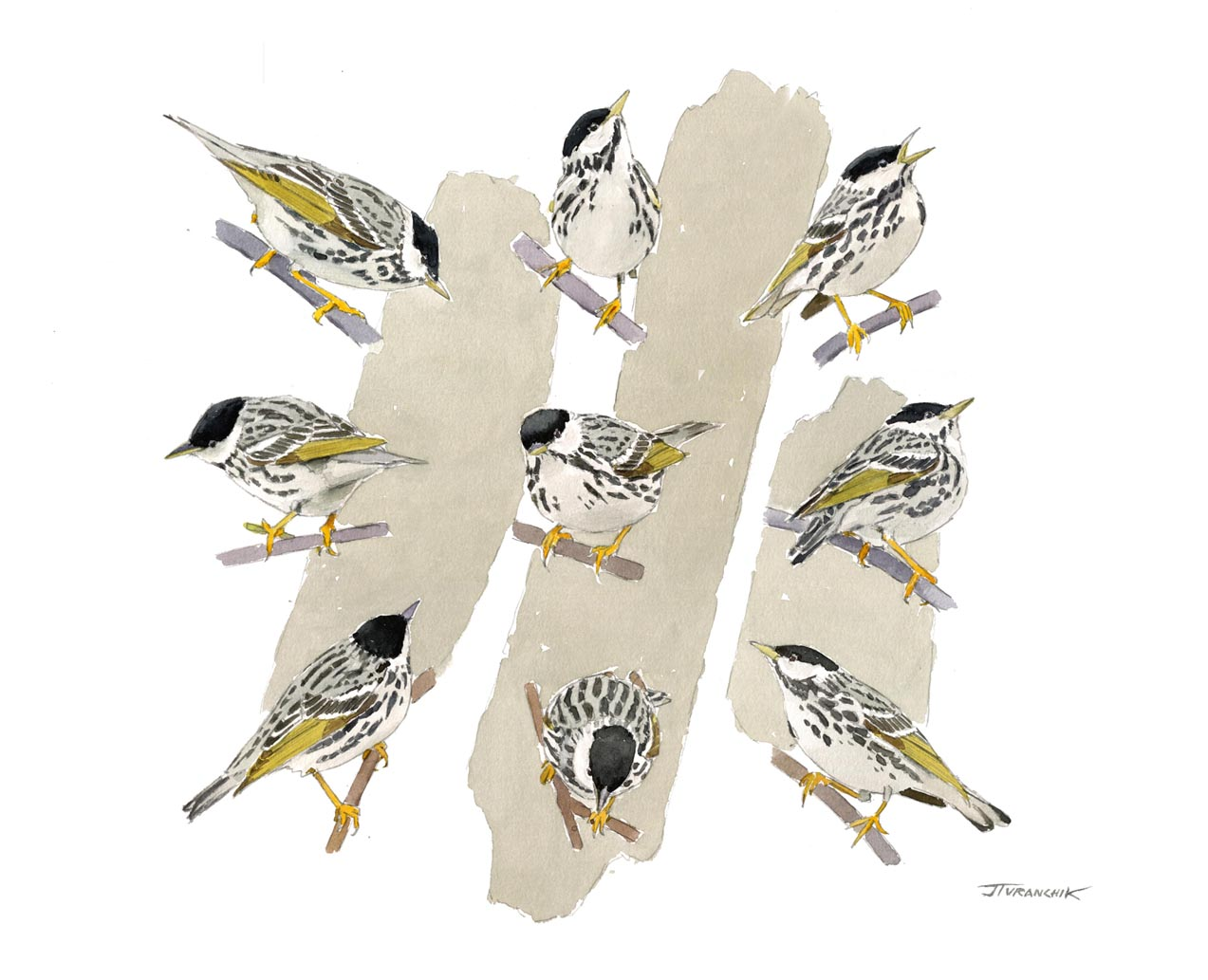 The Compleat Blackpoll Warbler