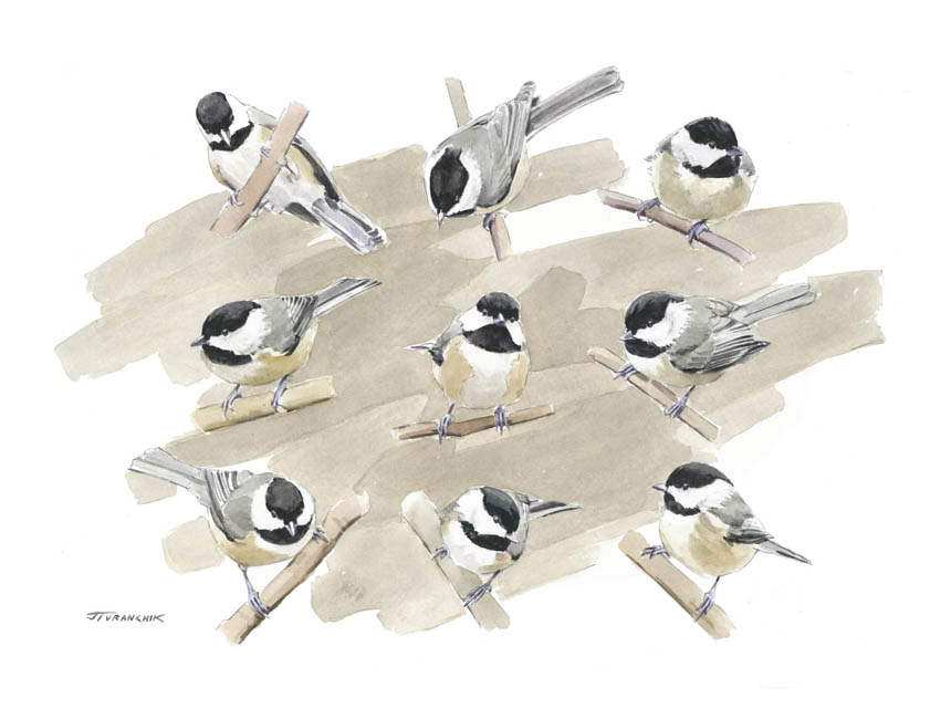 The Compleat Chickadee