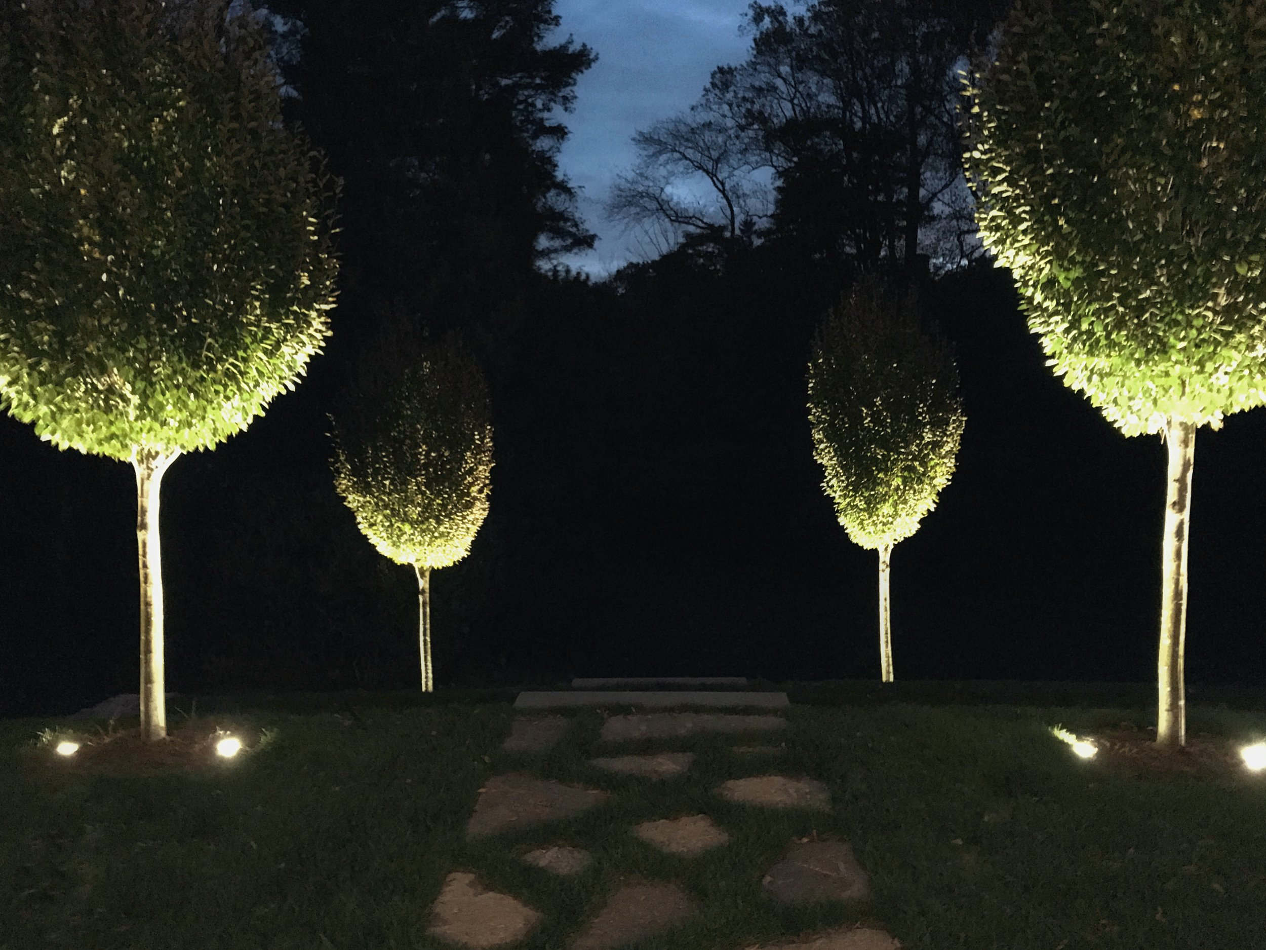 Night view of trees