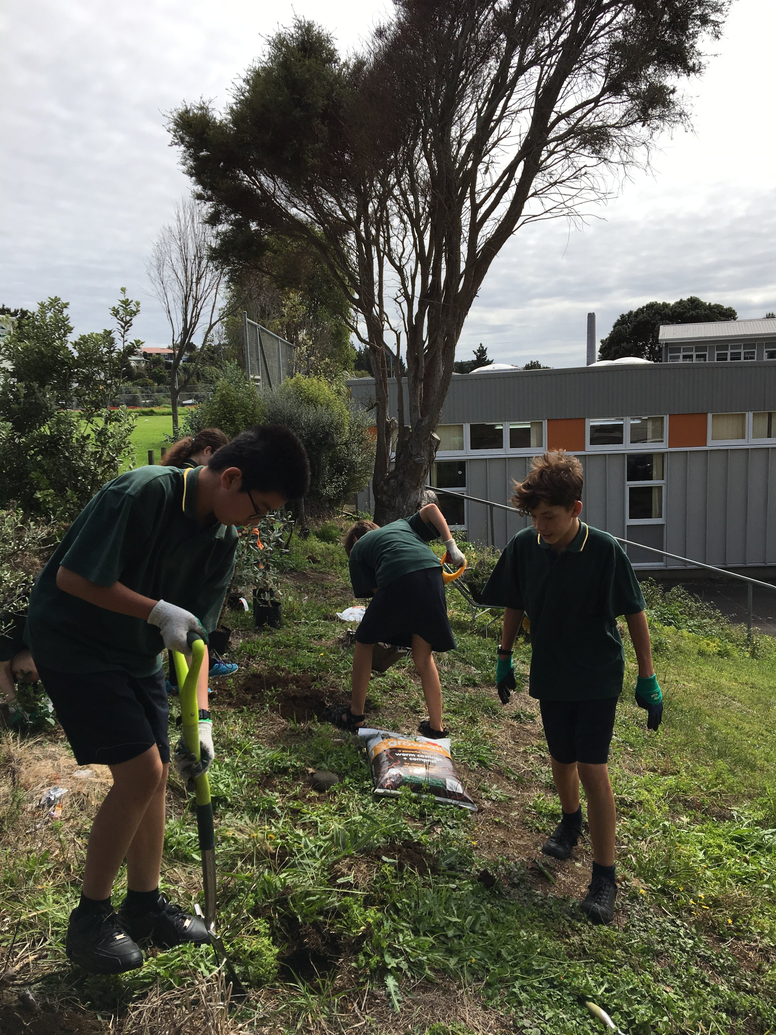Sustainability in Action   - Group Photo:  Spotswood Students planting native trees around their school.