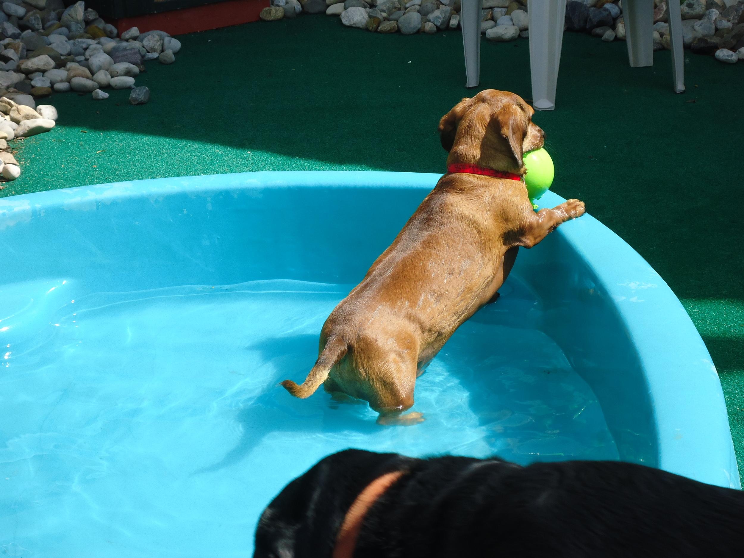 Charlie Pool 2.JPG