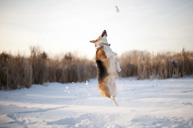 Dogs-in-the-snow.jpg