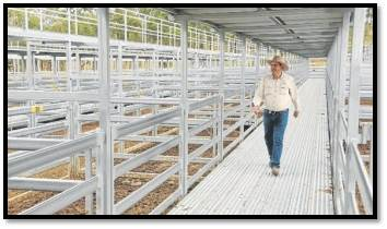 Beaudesert Sale-yards Walkway - Queensland Country Life