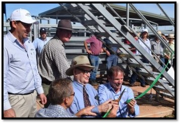 NVLX Officially Open - ABC Rural