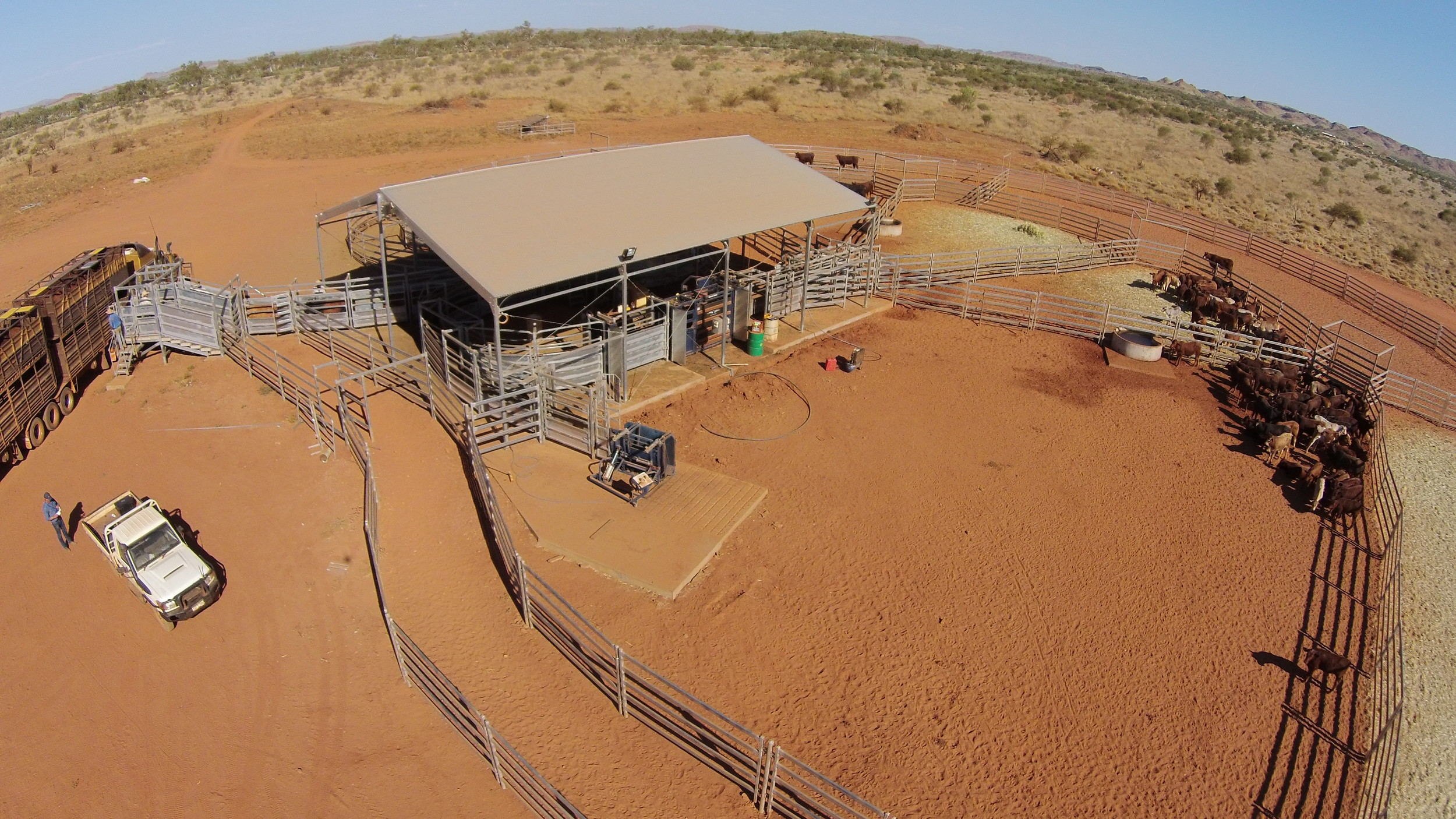 Thompson Longhorn working centre cover at Minderoo Station.