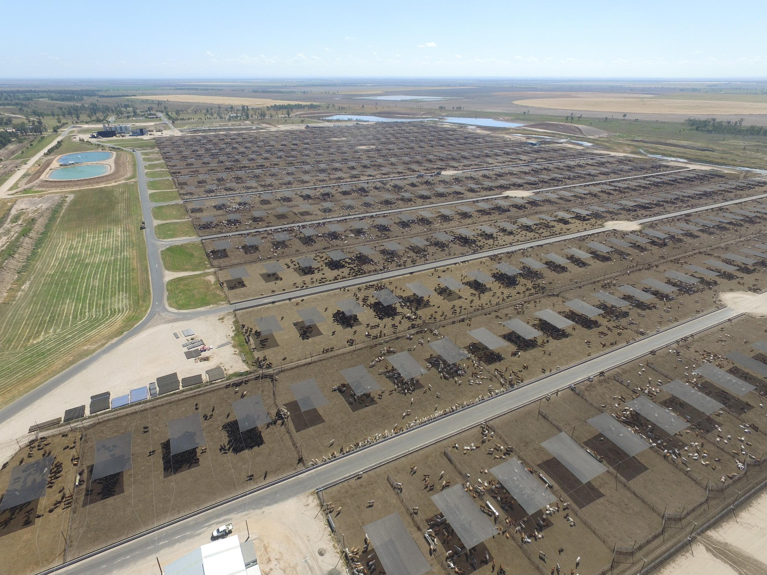 Distance to move cattle is very important in large yards and feedlots