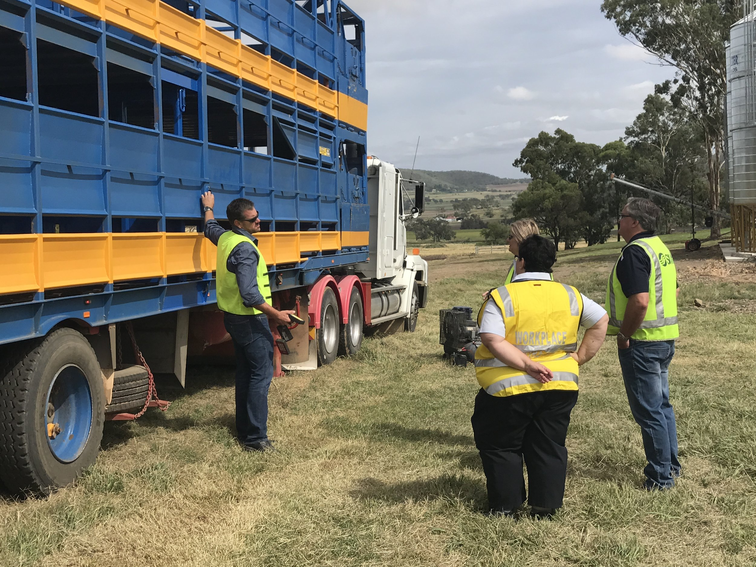 Workplace Health and Safety Queensland viewing the automated cattle crates
