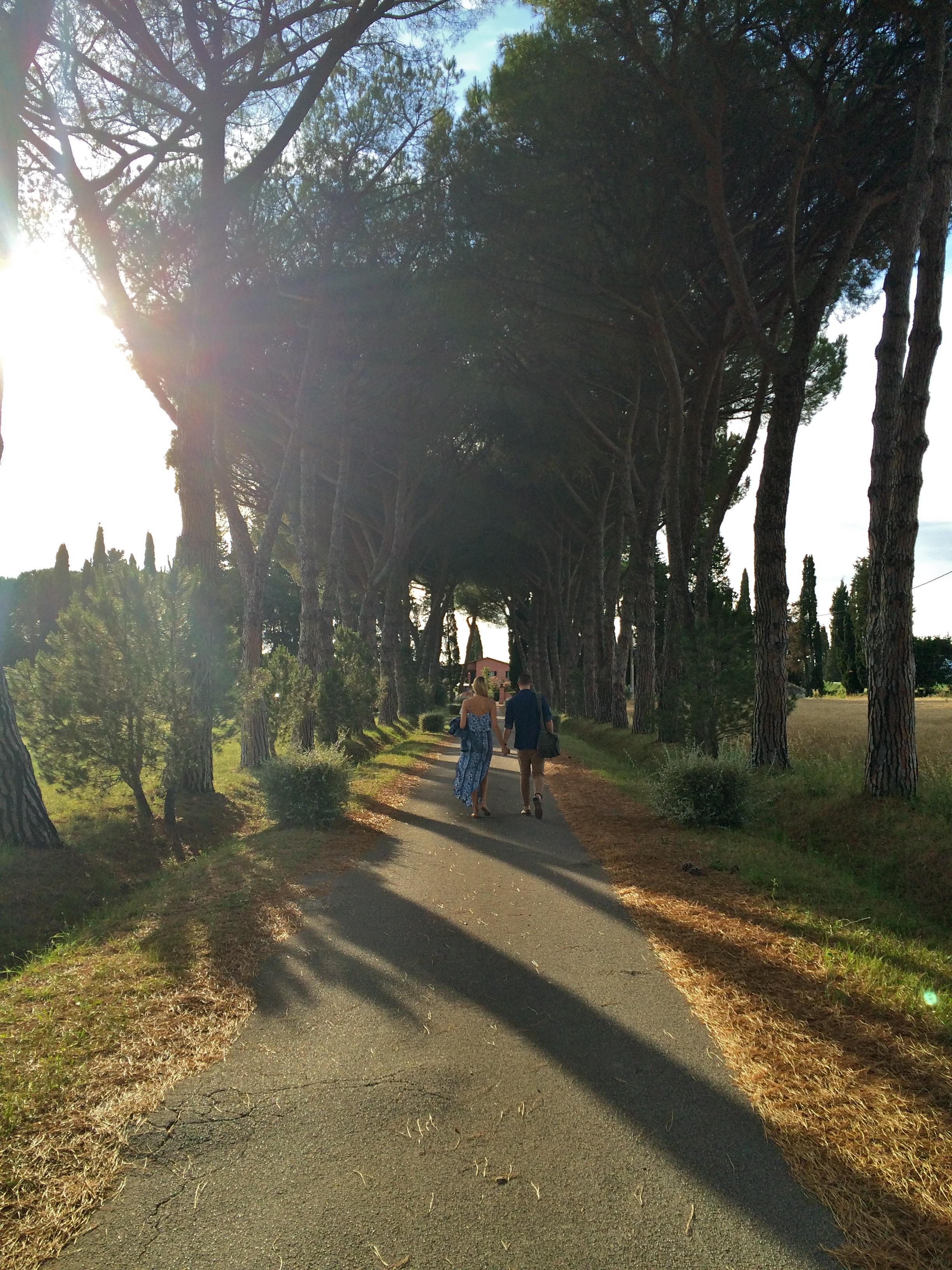 ◆ Love birds in Tuscany