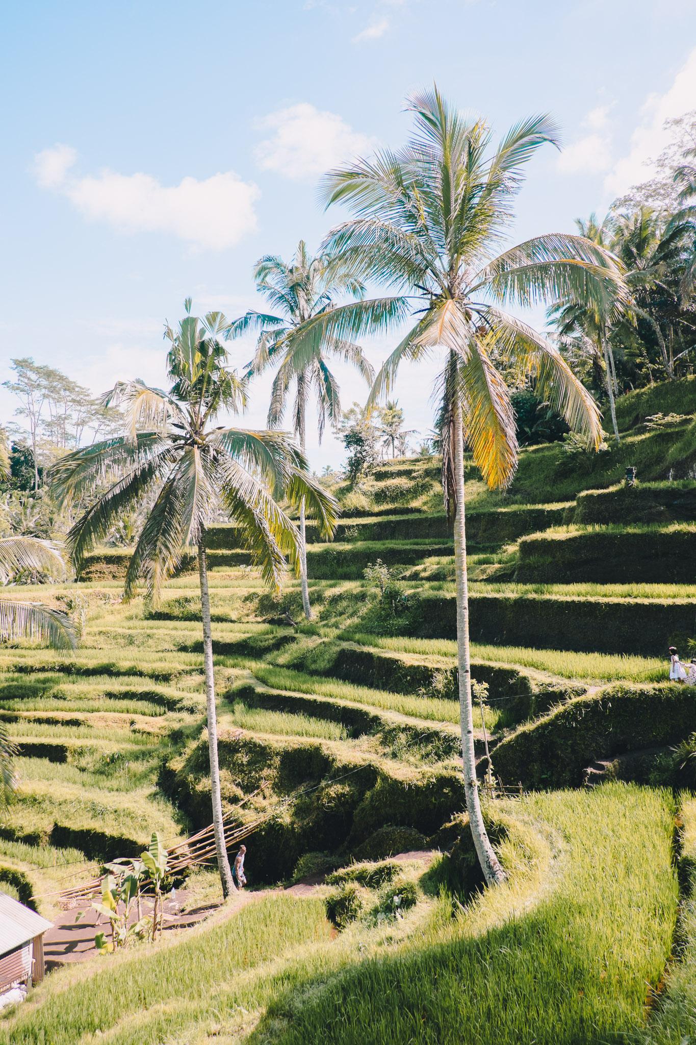 indonesia-bali-rice-fields-7.jpg