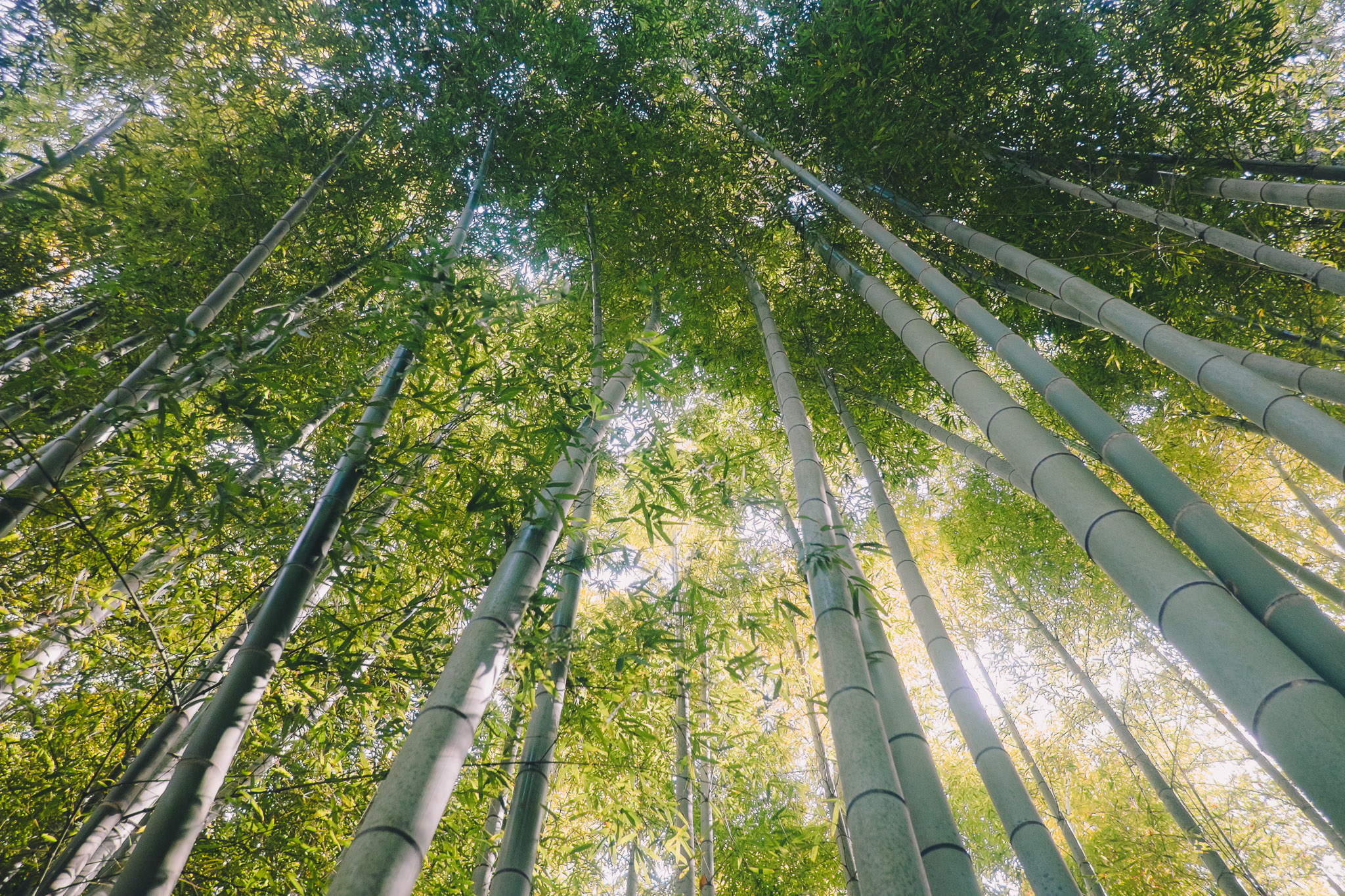 japan-kyoto-bamboo-forest.jpg