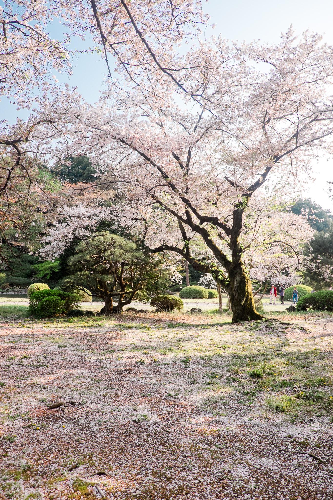japan-tokyo-24.jpg