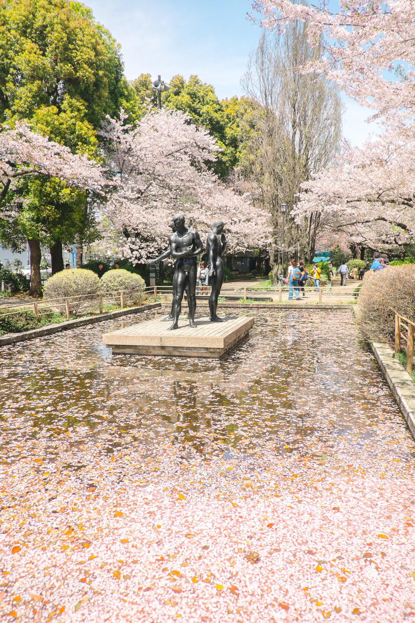 japan-tokyo-cherry-blossom-2.jpg