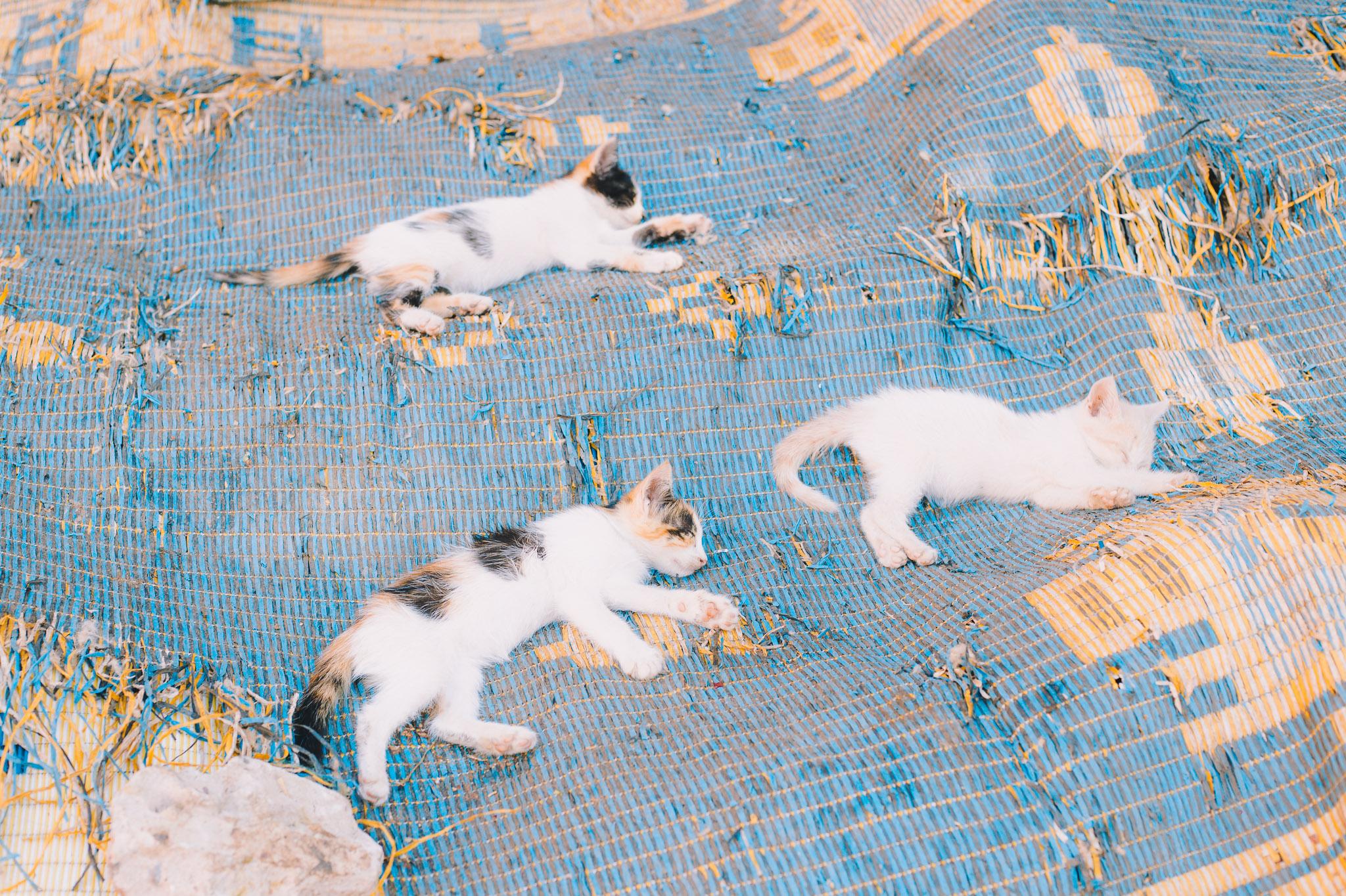 morocco-marrakech-10.jpg