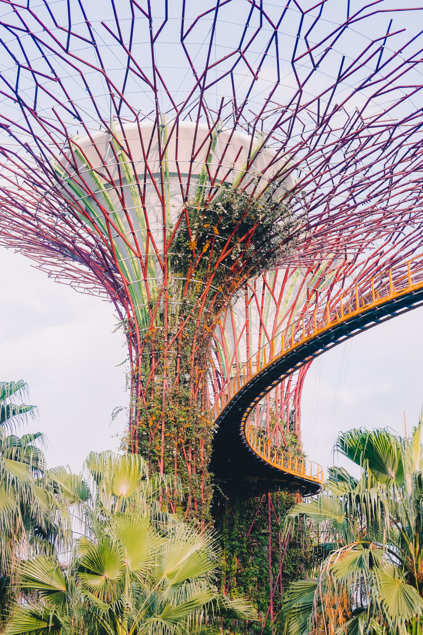 singapore-gardens-by-the-bay-supertrees.jpg