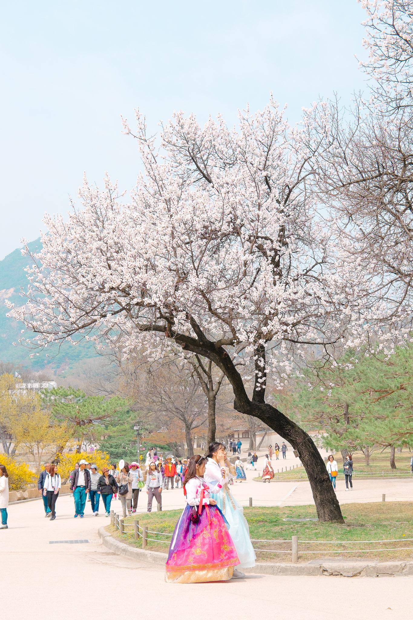 south-korea-seoul-palace-5.jpg