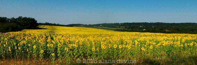 Fields That Follow The Sun