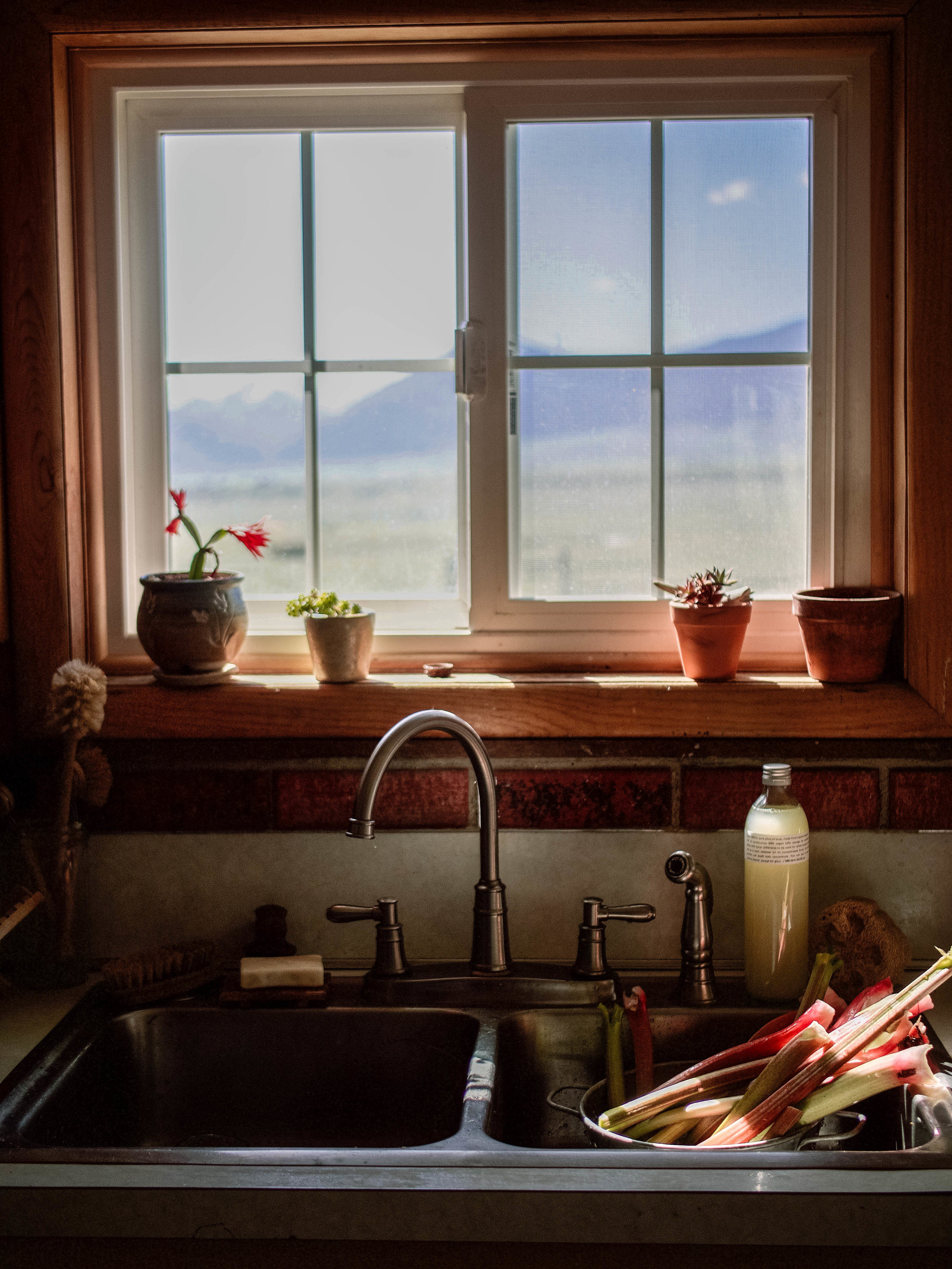 kitchen window with rhubarb