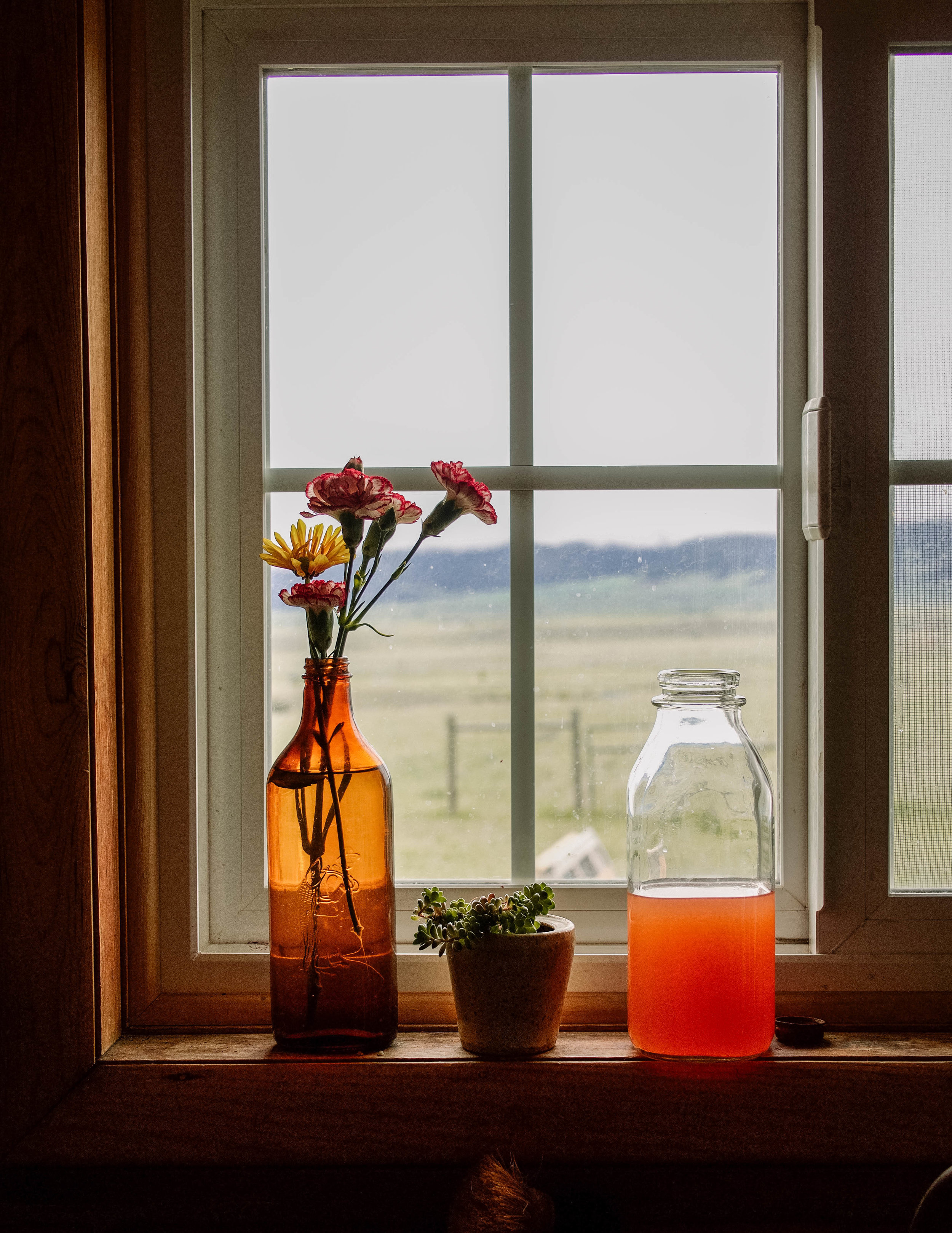 rhubarb shurb in a kitchen window
