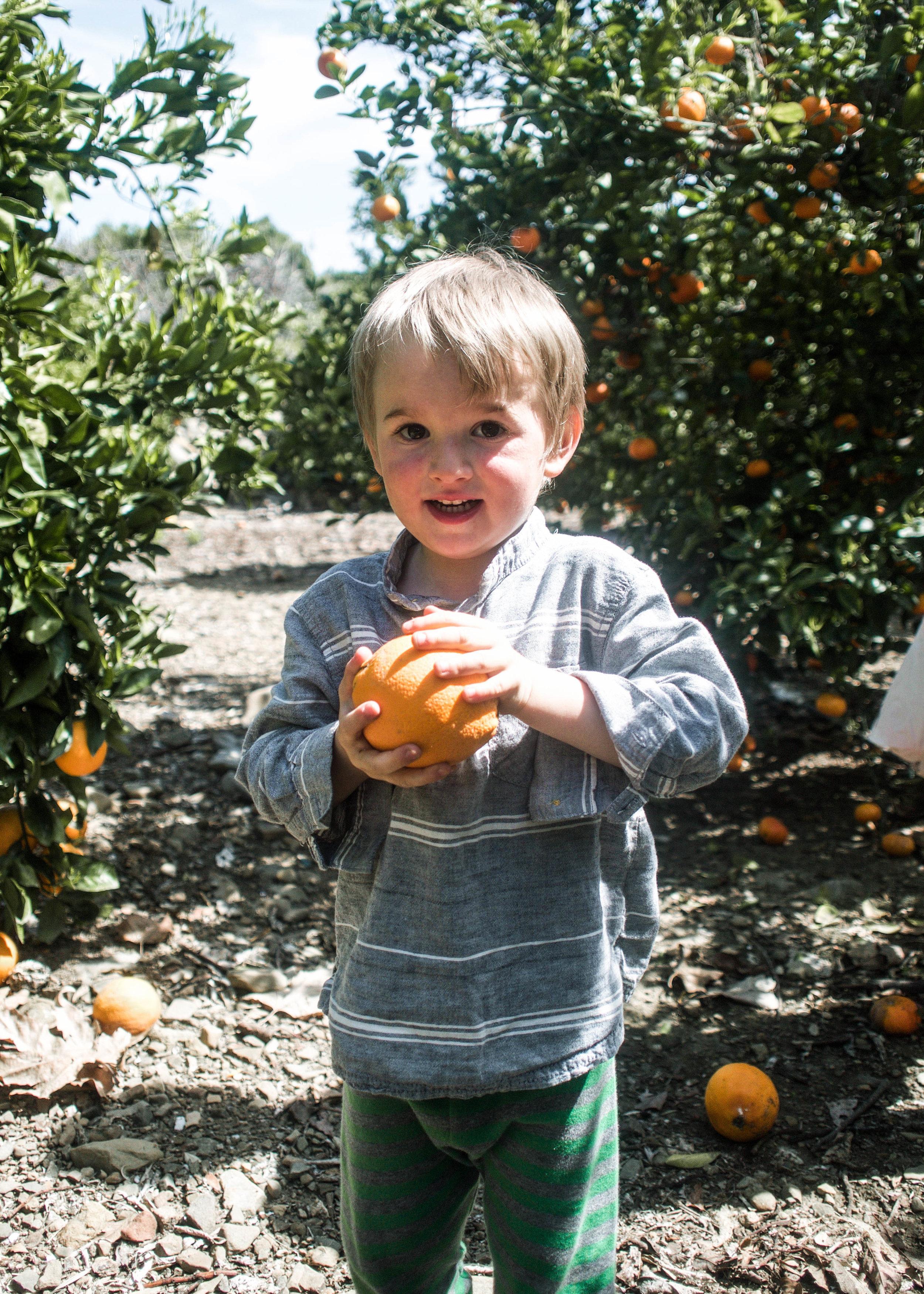 Leon picking oranges