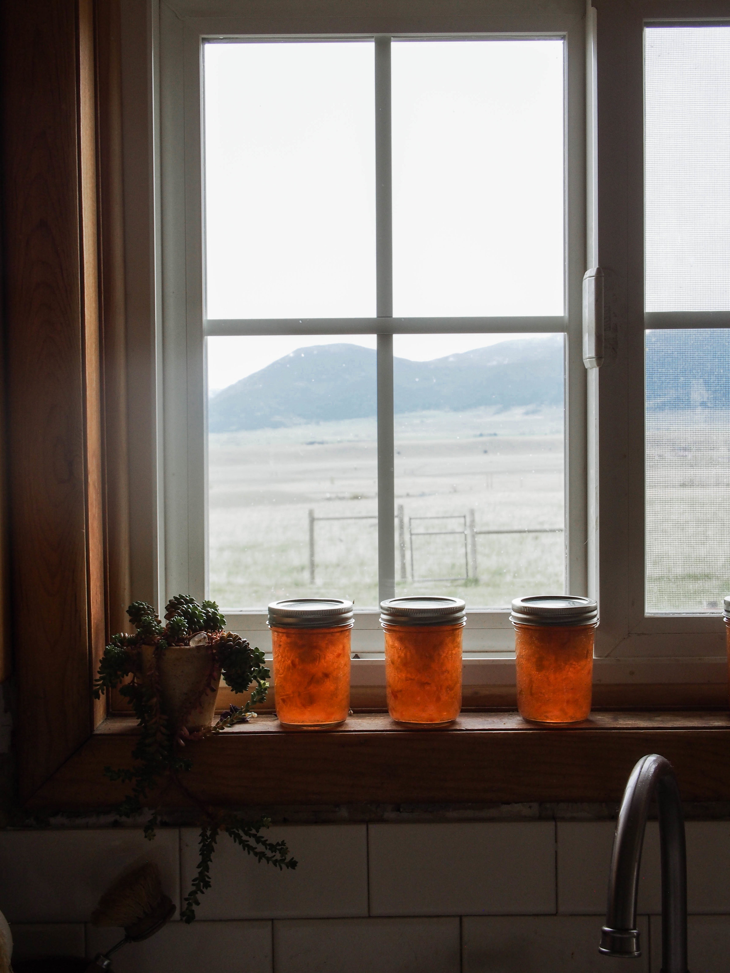 rhubarb jam in a ktichen window