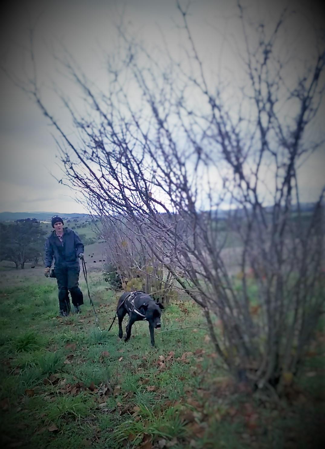 The truffle hunt.