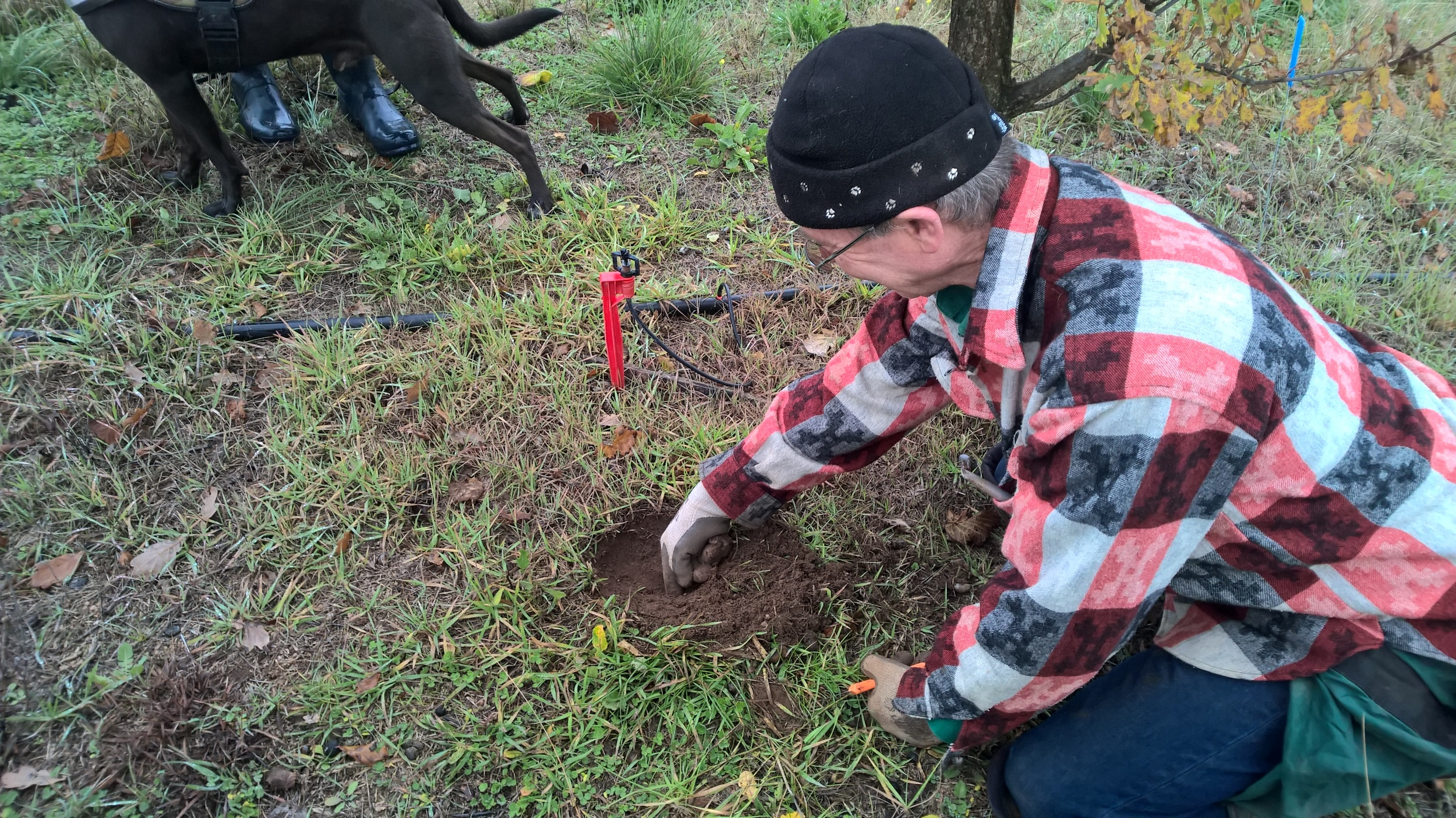 The truffle dig.
