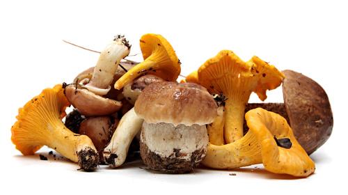 VIVE Cooking School Mushroom Recipe