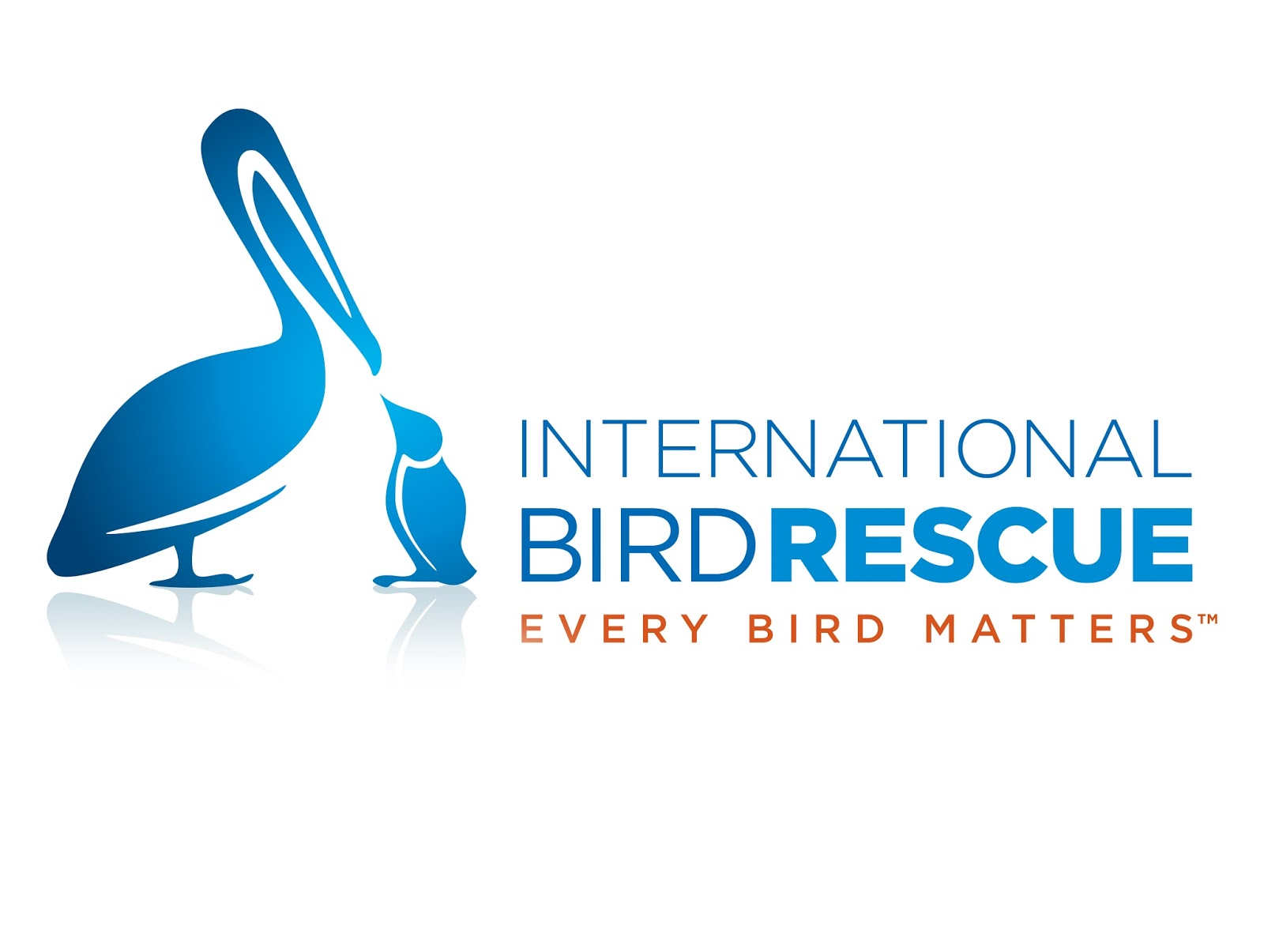 Photo Courtesy of the International Bird Rescue