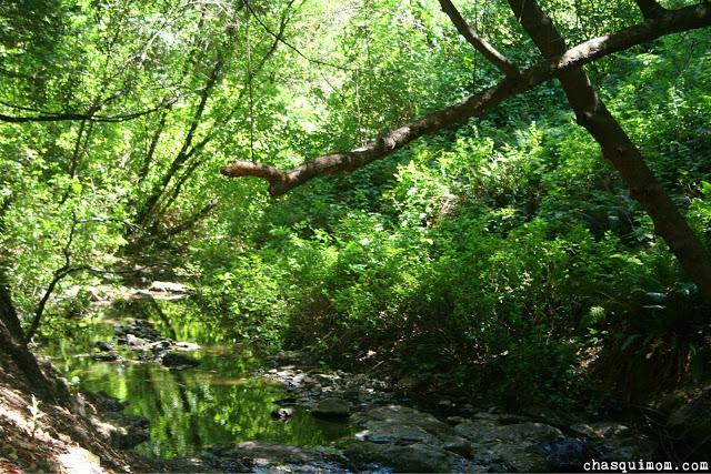Creek.jpg.jpg