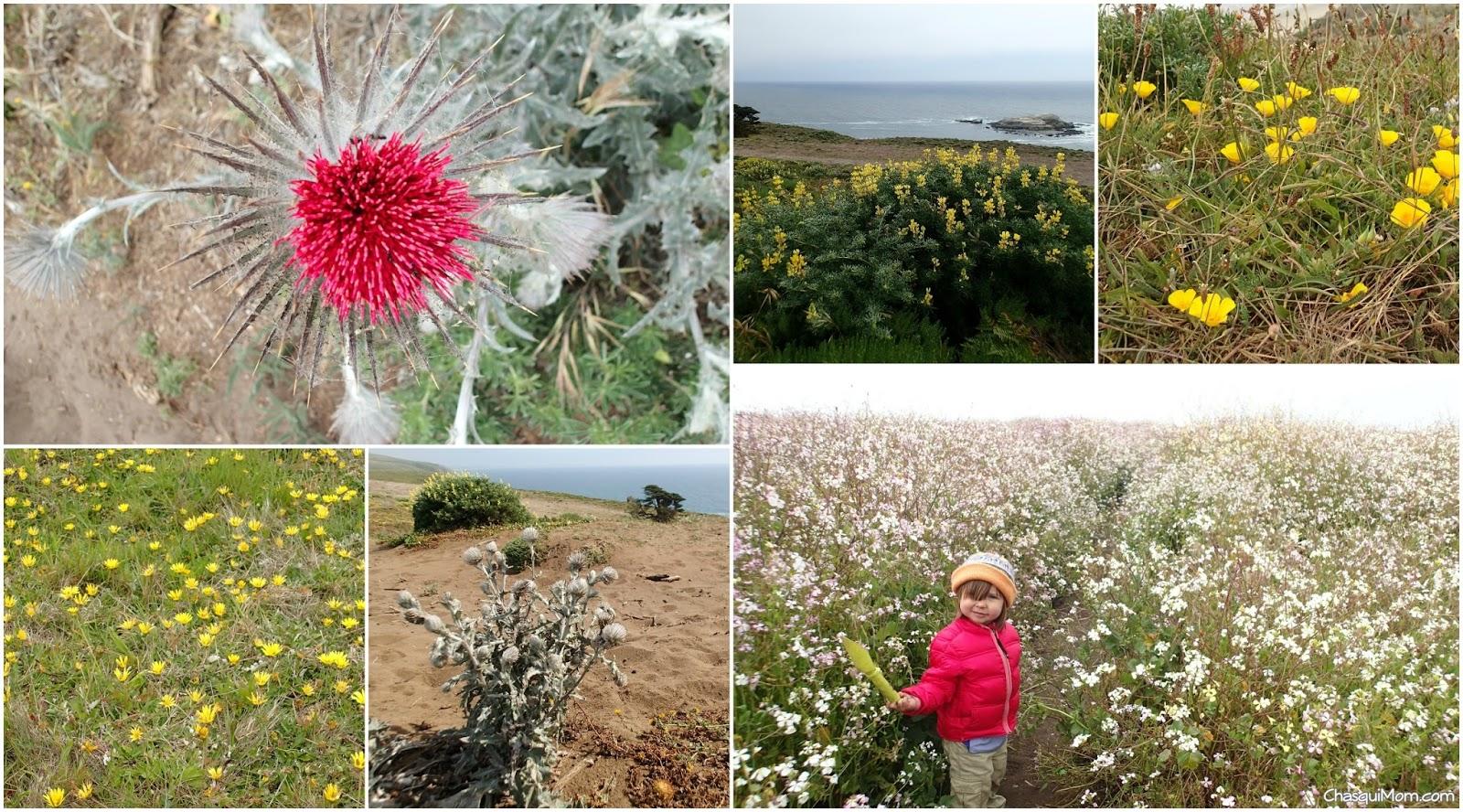 WildflowerTomales.jpg