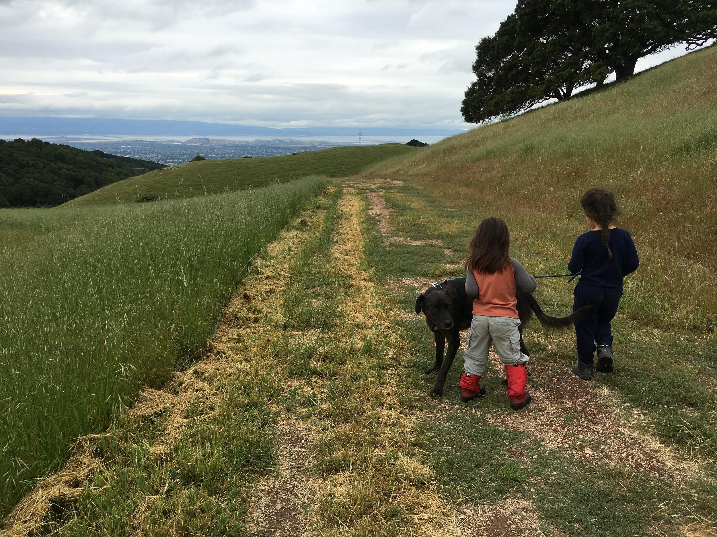 Dogs Love Vargas Plateau too!