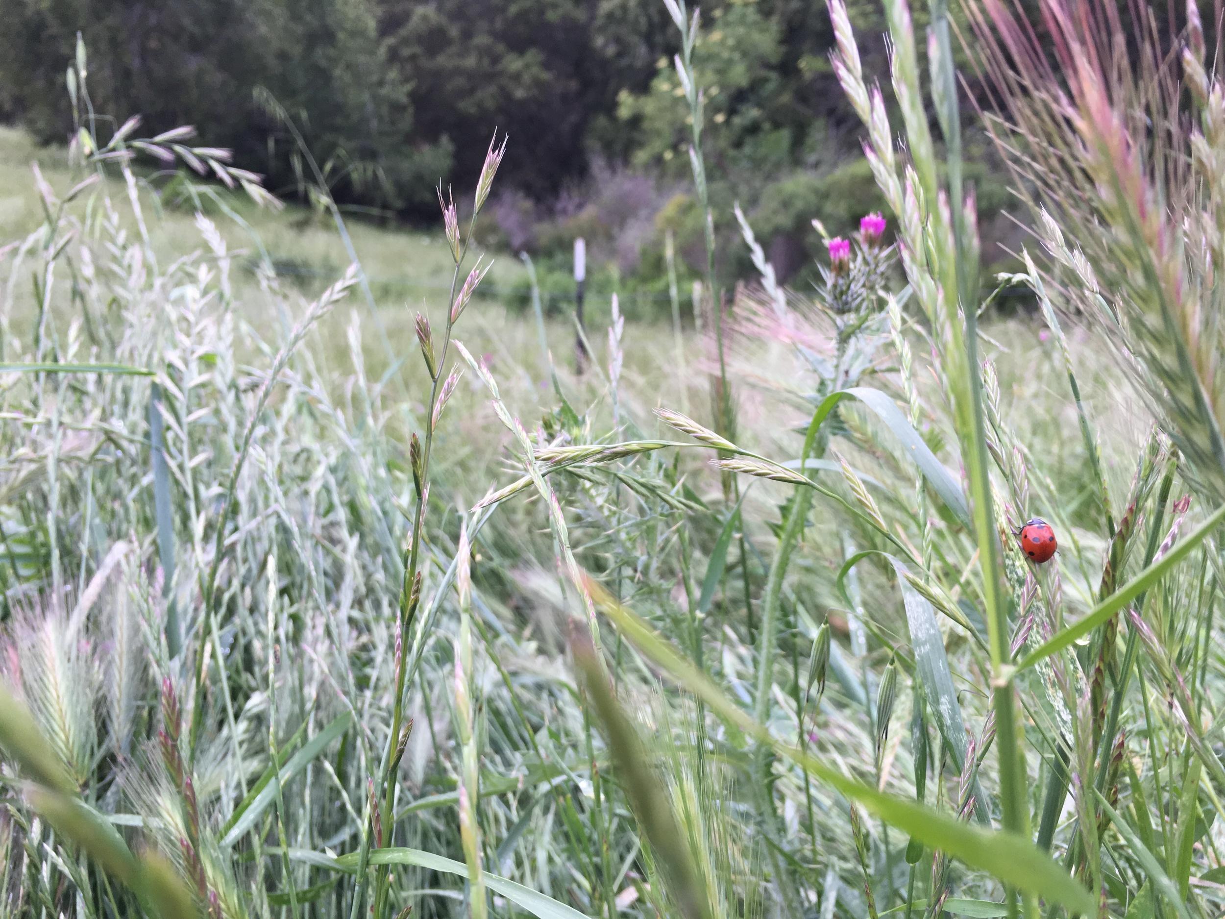 Springtime Ladybugs