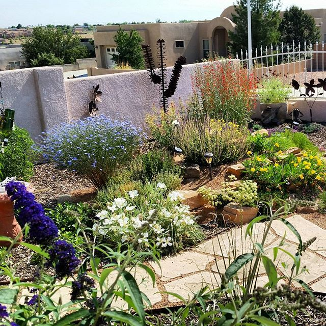 This is the time of year when we really start to see the fruits of last year's labor. This #rockgarden that @louis_wilcox_art built last year has grown into an amazing display of color and home to many #pollinators including #hummingbirds #bees and #butterflies. With projects like this, we work to dispel the notion that #xeriscaping is defined as a couple of cacti in a yard full of gravel. Xeriscaping should be a boon to local ecology and biodiversity while still being drought tolerant and low maintenance. #southwesthorticulture #xeriscape