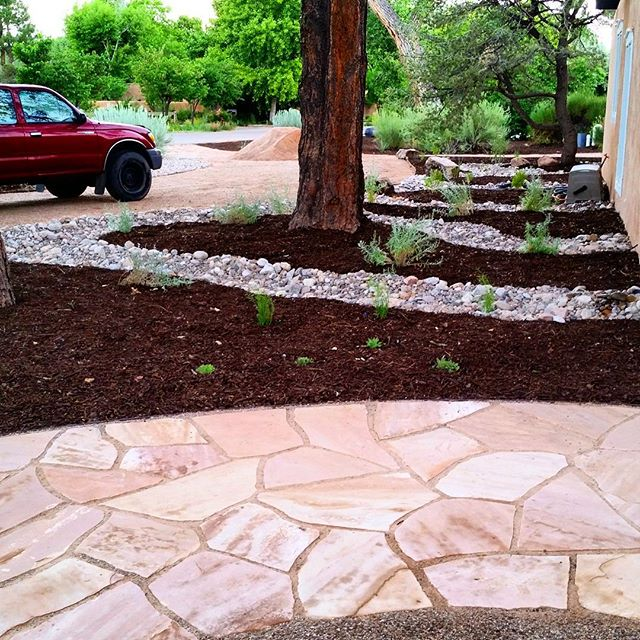 Some beautiful  #flagstone  and  #swale  work underneath two ponderosa pine  #trees  at one of our latest  #landscapes . The design was by Judith Phillips, a renowned  #southwest  landscape designer. The install was by  #southwesthorticulture  of course!   #landscape   #nativeplants   #landscaping  #hardscape