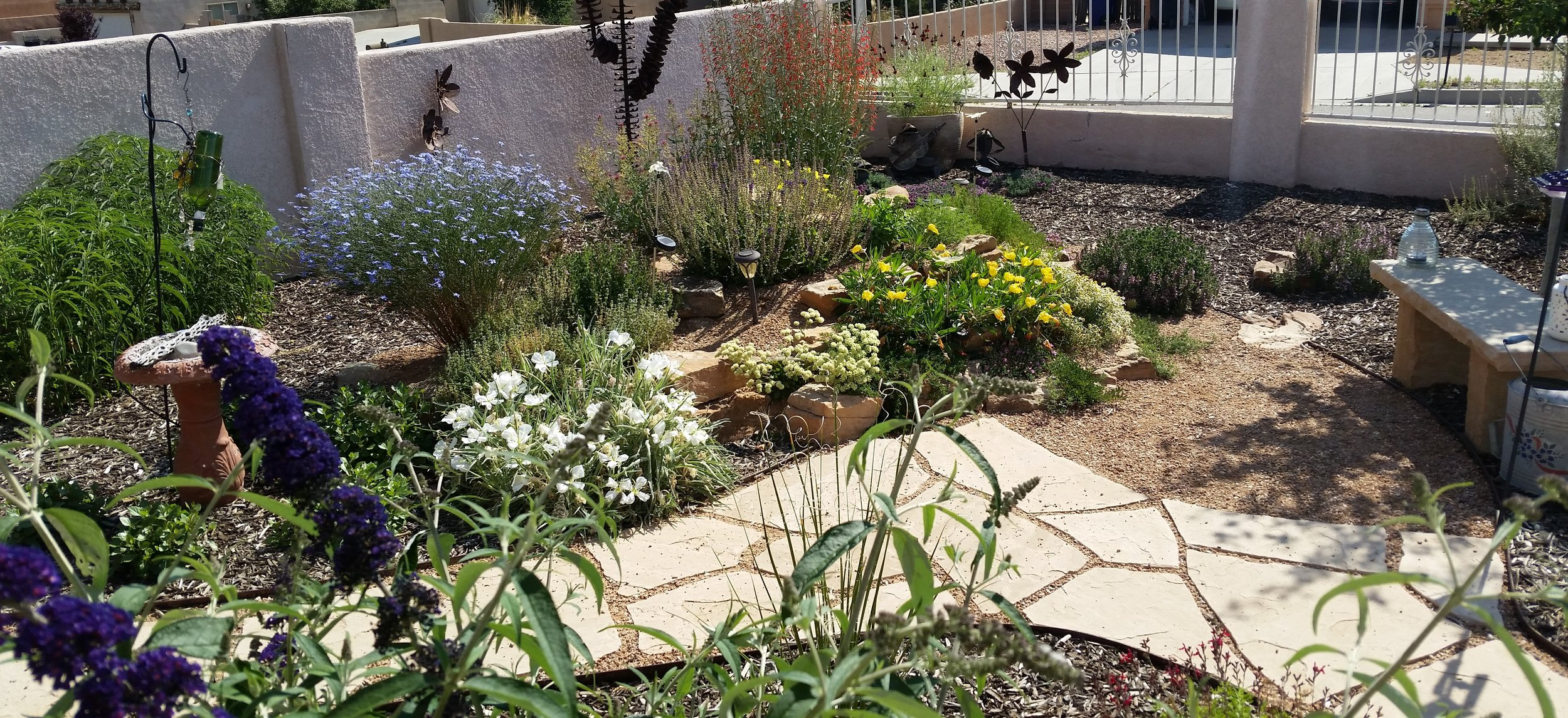 "Yes, this is the ""after"" of the same yard that had a big, flat, thirsty, monochrome lawn and concrete everywhere.  This #rock #garden has really come to life in just the last year and a half since the #install."