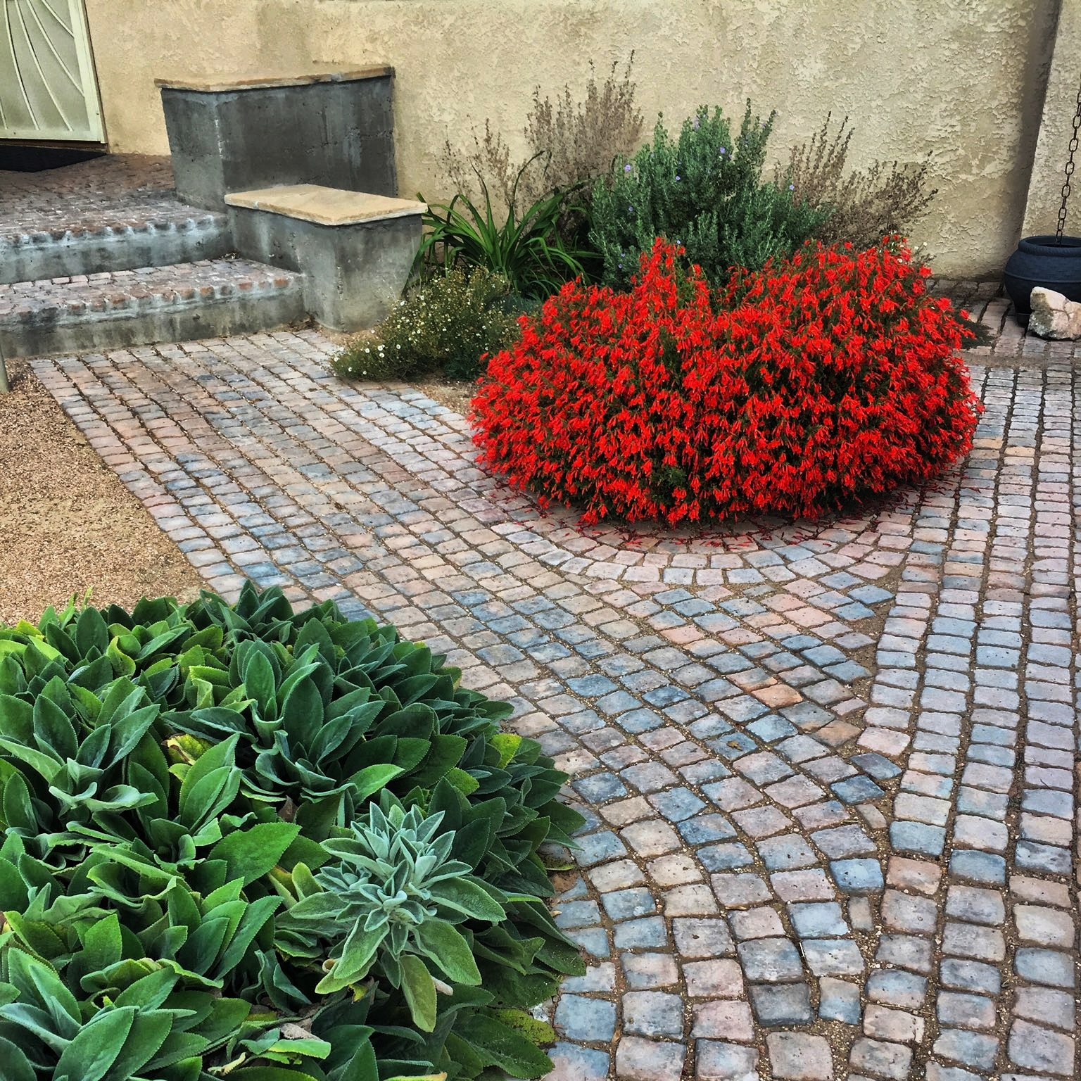 Fall greetings from all of us here at Southwest Horticulture. Here is a photo taken by Louis of a design by George Radnovich from Sites Southwest that we installed last spring. The permeable paver walkways are great quality with a timeless appearance and are manufactured locally by a company called Riccobene. The red flowing plant is Epilobium canum or Hummingbird Trumpet.  #southwesthorticulture #horticulture #landscapes #landscaping #landscapedesign #nativeplants #xeriscaping #xeriscape #waterconservation #gardening #albuquerque #newmexico