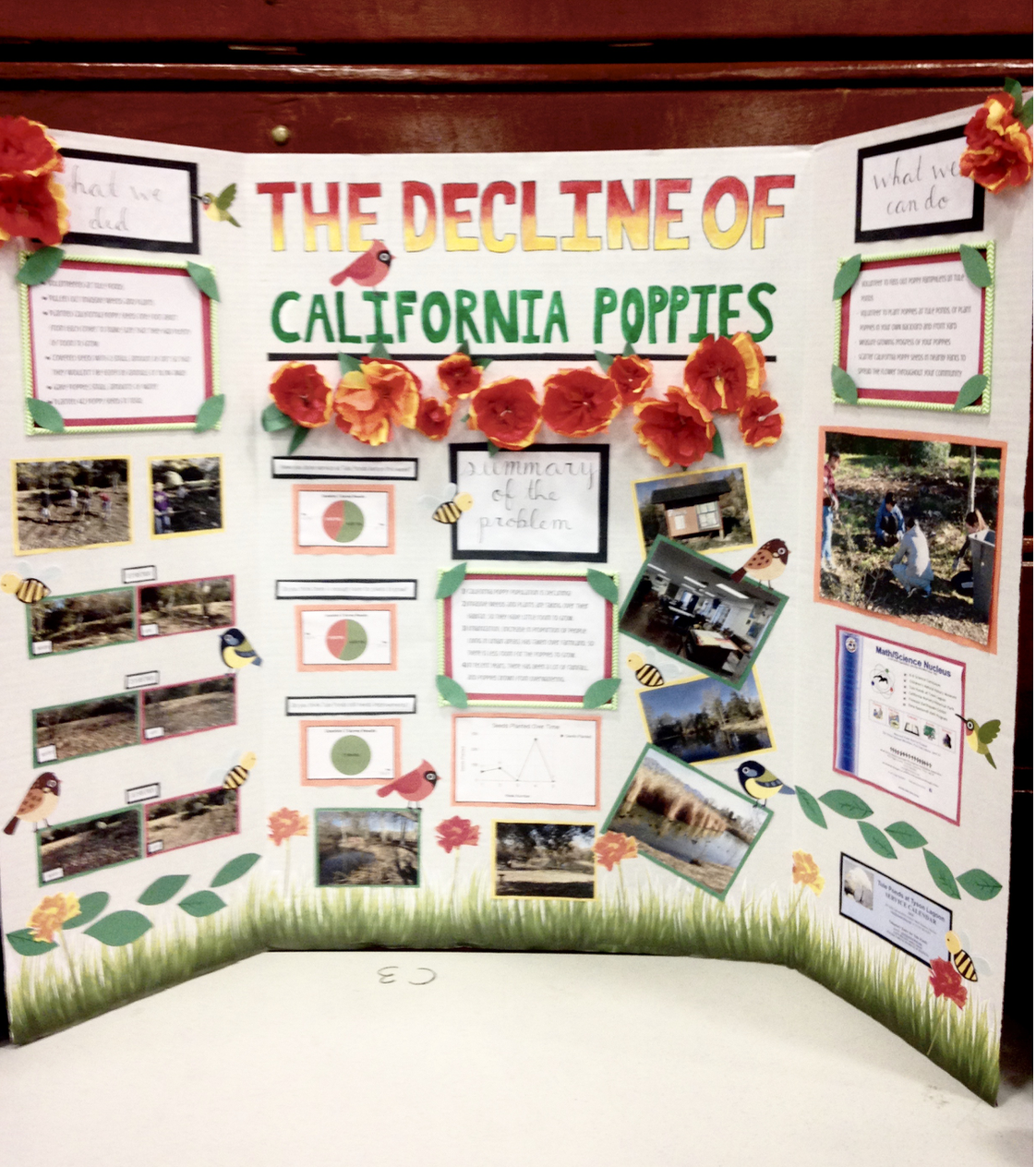 Decline of California Poppies - Emily N, Kacey T, Sophia M, Ellie B, Kay KProblem: Many poppies died because of invasive species, urbanization, and drowned from overwatering.Service: They planted poppy seeds at Tule Ponds.