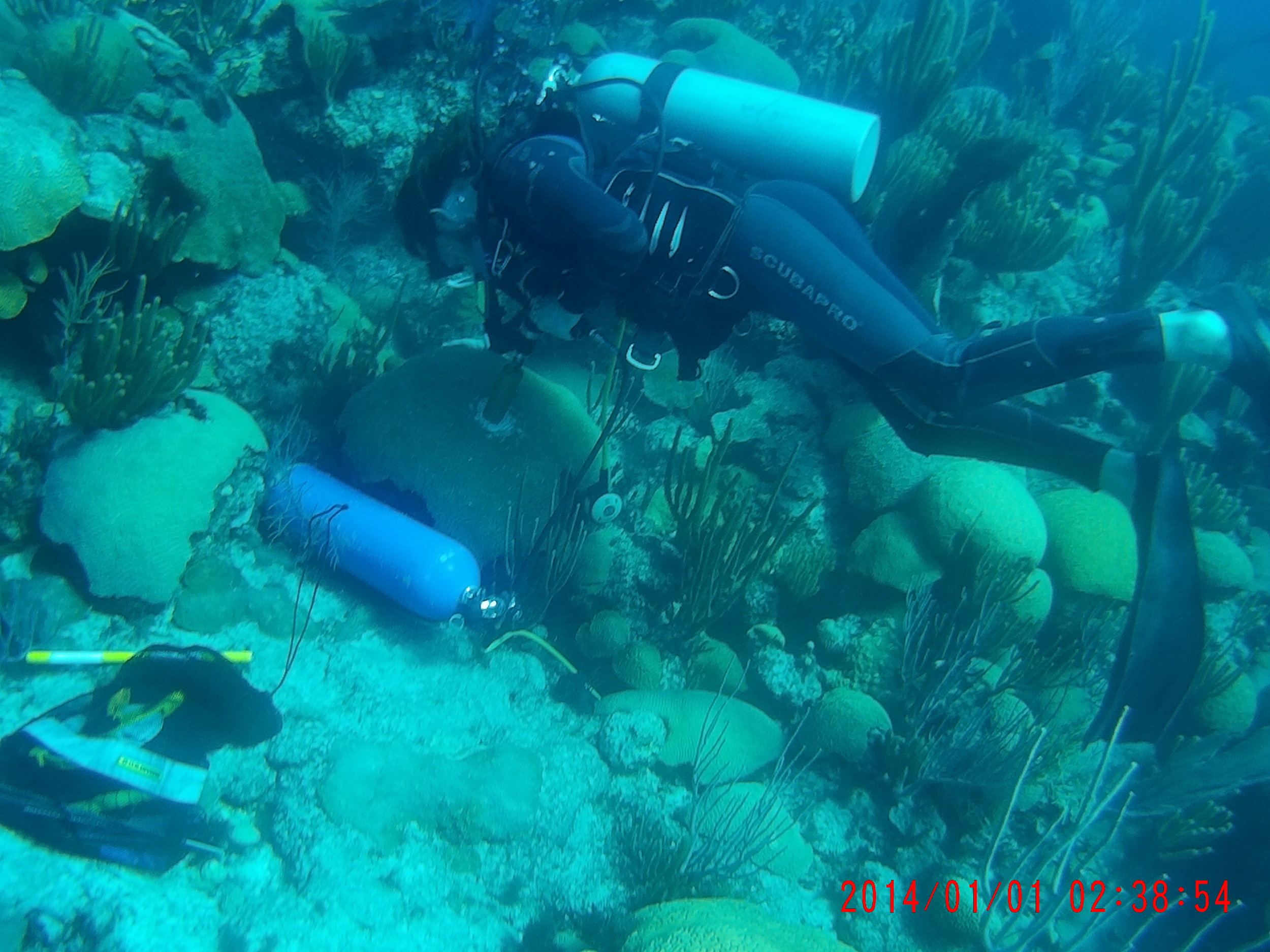 Figure 5. BIOS dive team member coring coral adjacent to Hog Reef CO2 buoy, Bermuda